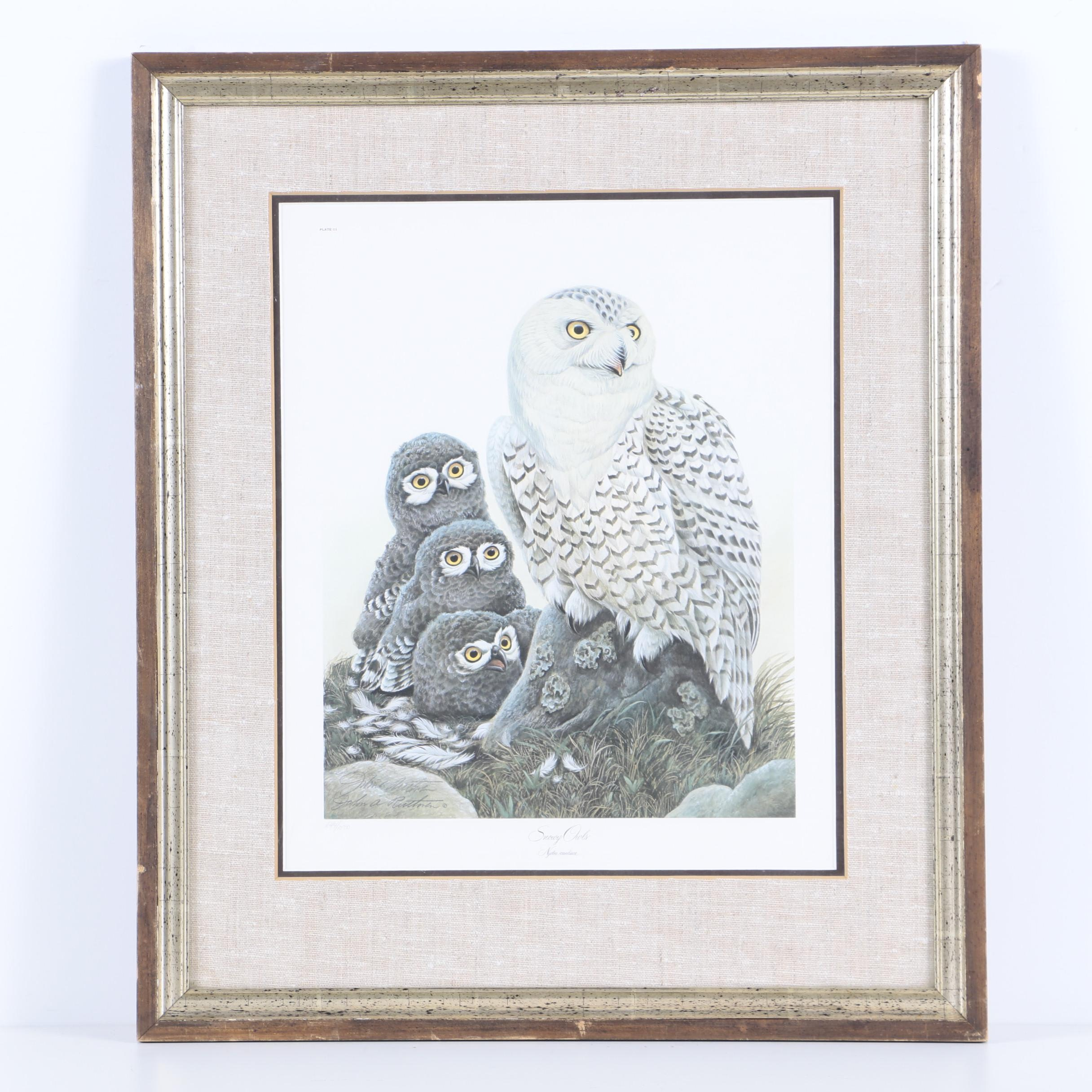 "John Ruthven Limited Edition Offset Lithograph ""Snowy Owls"""