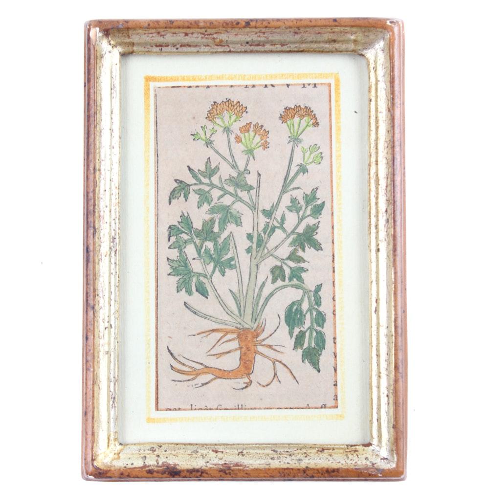 Hand-Colored Botanical Print
