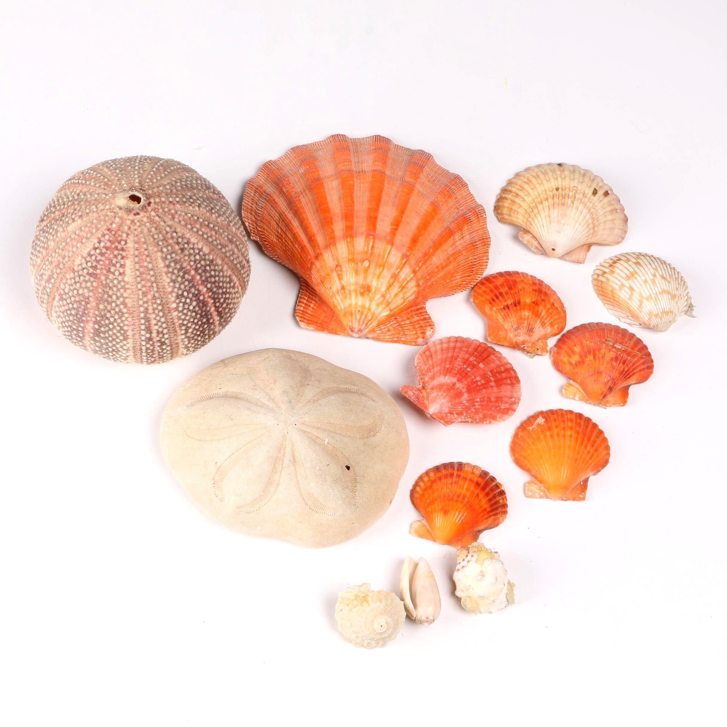 Recent Marine Fossil Specimens