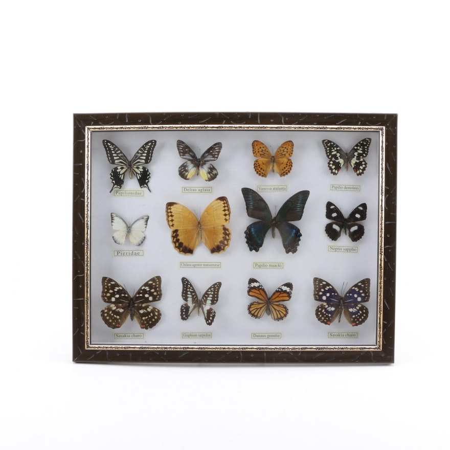 Framed Butterfly Collection : EBTH