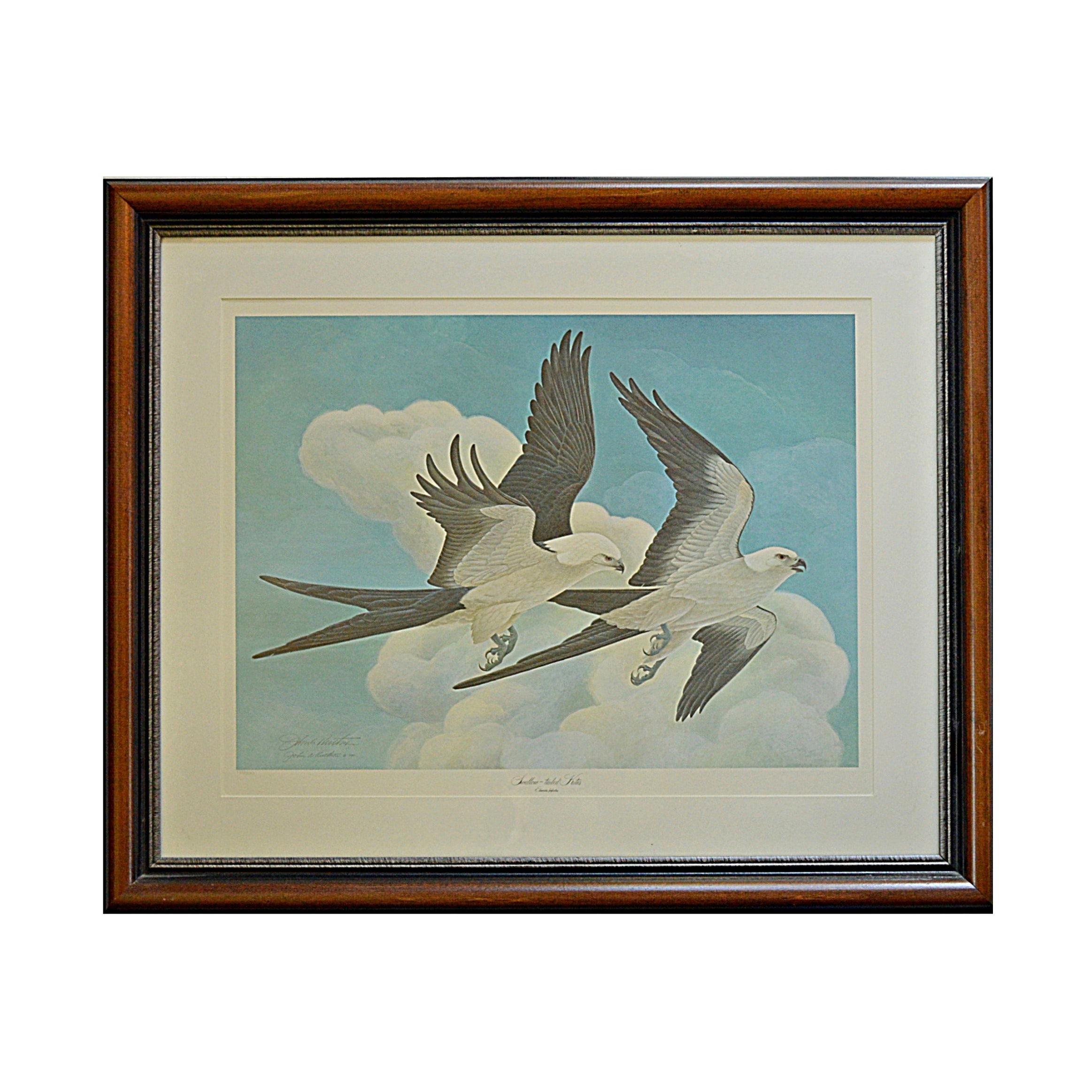 "John Ruthven Signed Limited Edition Offset Lithograph ""Swallow-tailed Kites"""