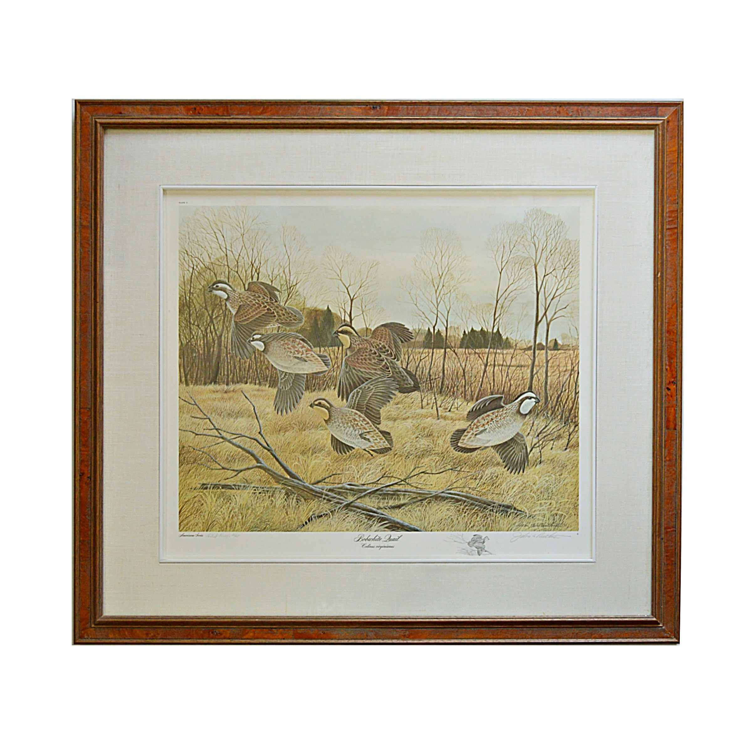 "John Ruthven Signed Limited Edition Offset Lithograph ""Bobwhite Quail"""