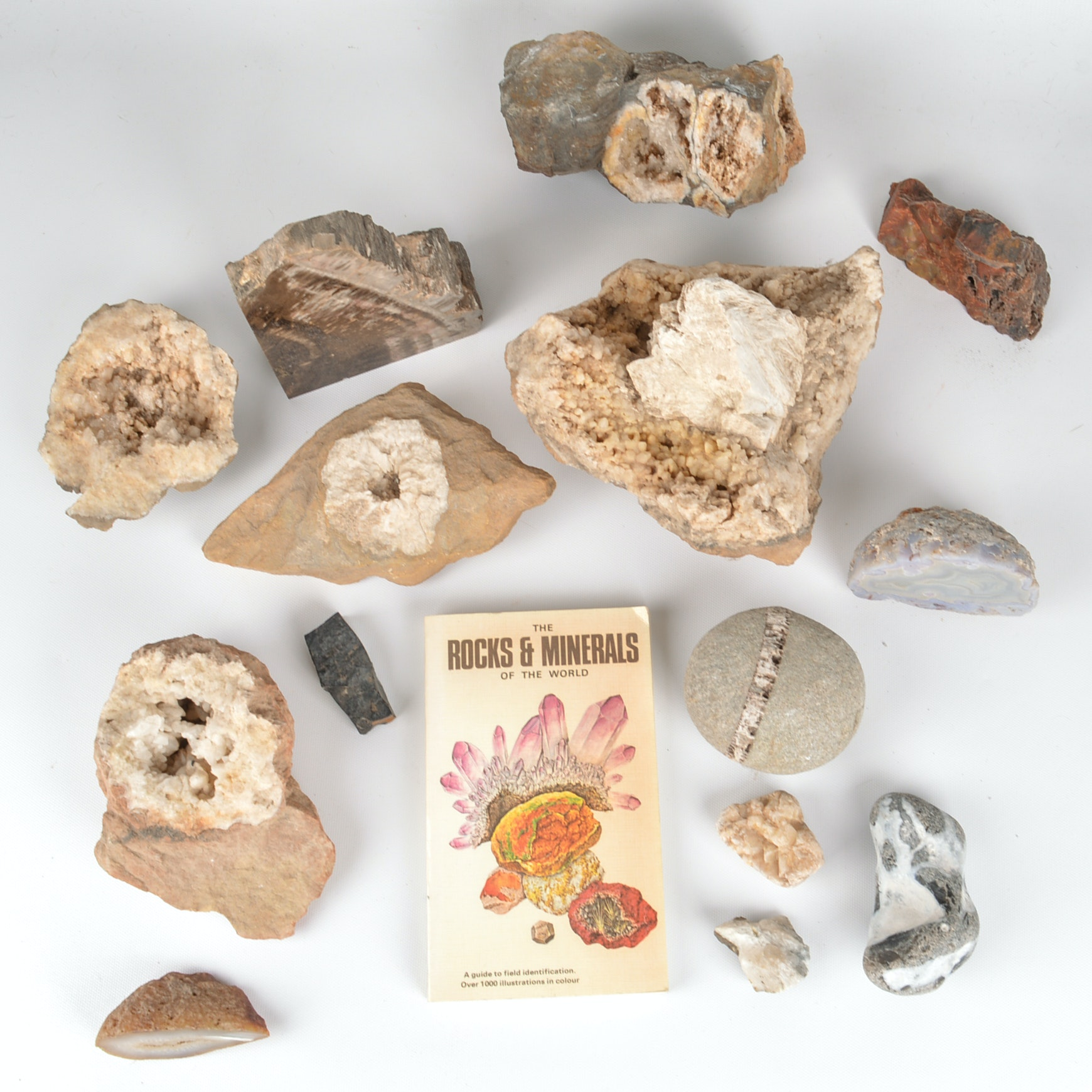 Assortment of Fossil and Mineral Specimens With Vintage Book