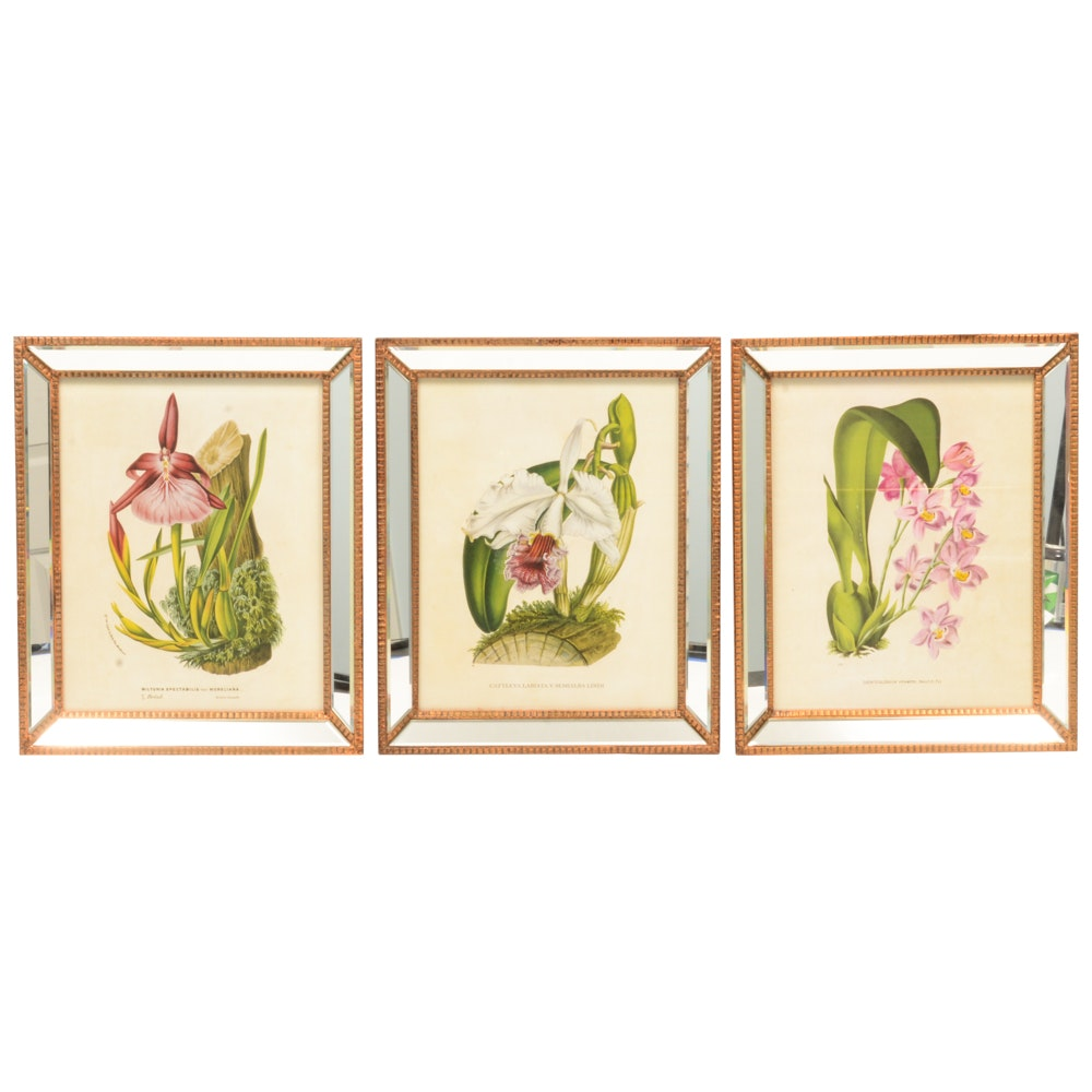 Botanical Offset Lithographs