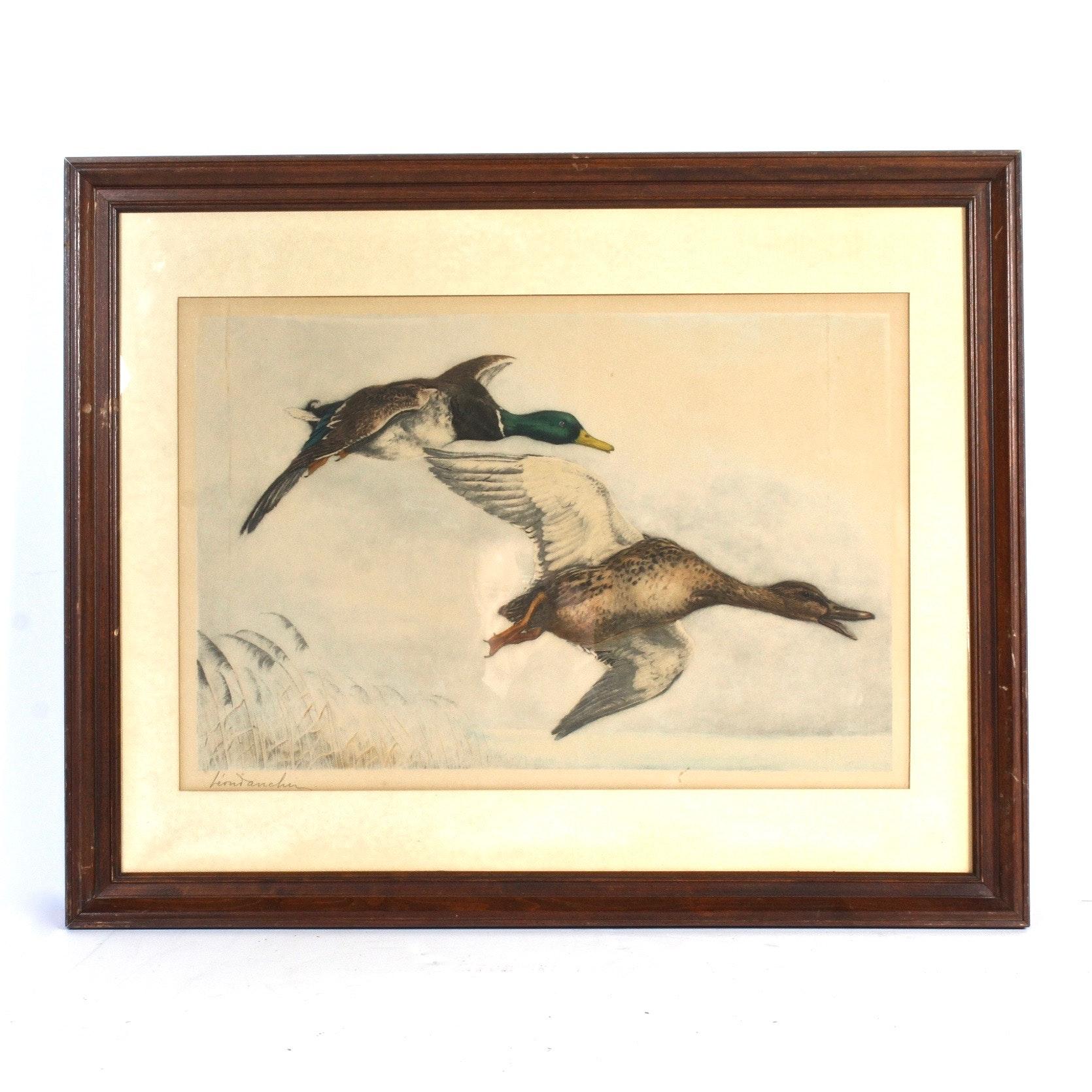 Leon Danchin Chromolithograph with Ducks in Flight