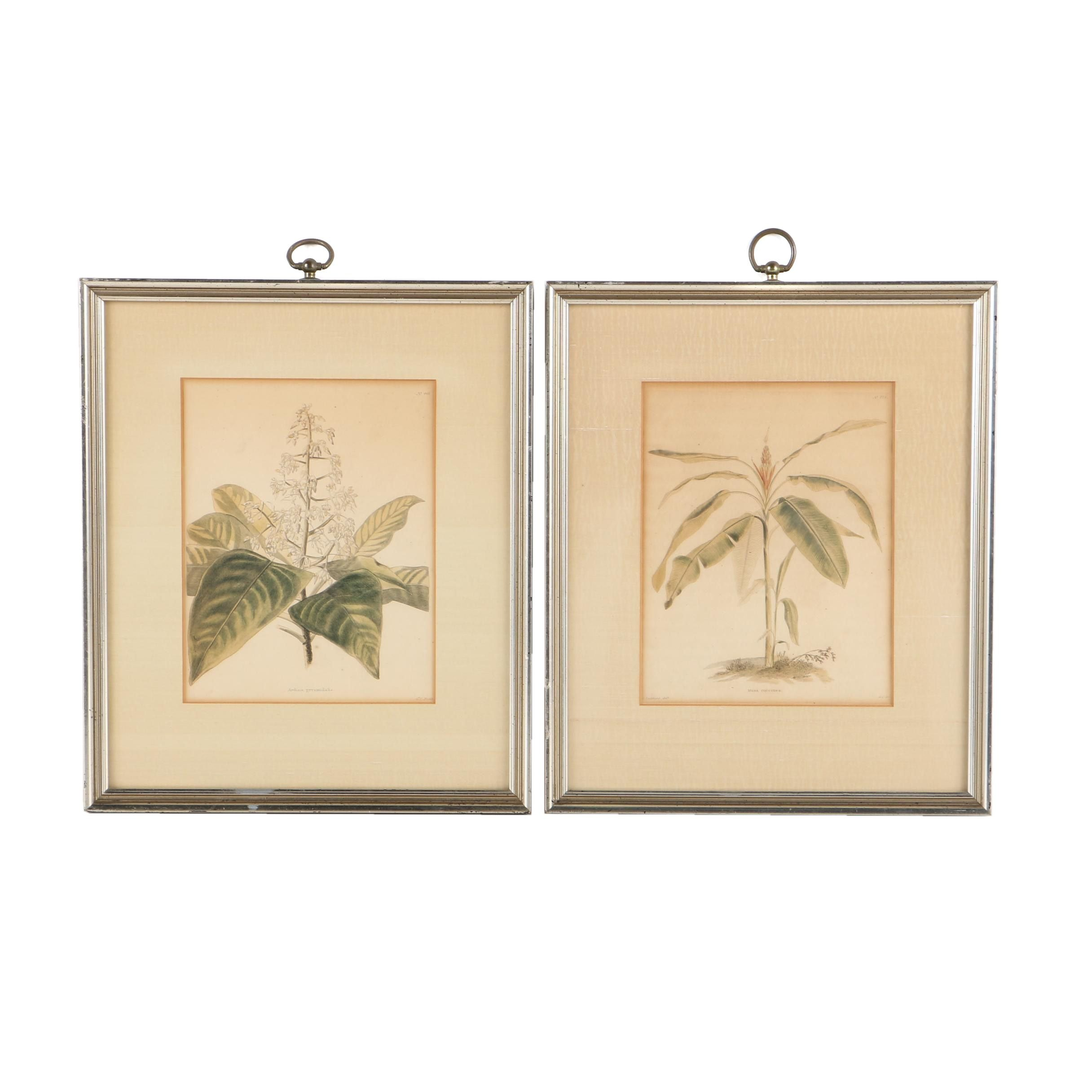 George Cooke Hand Colored Engravings of Botanical Illustrations