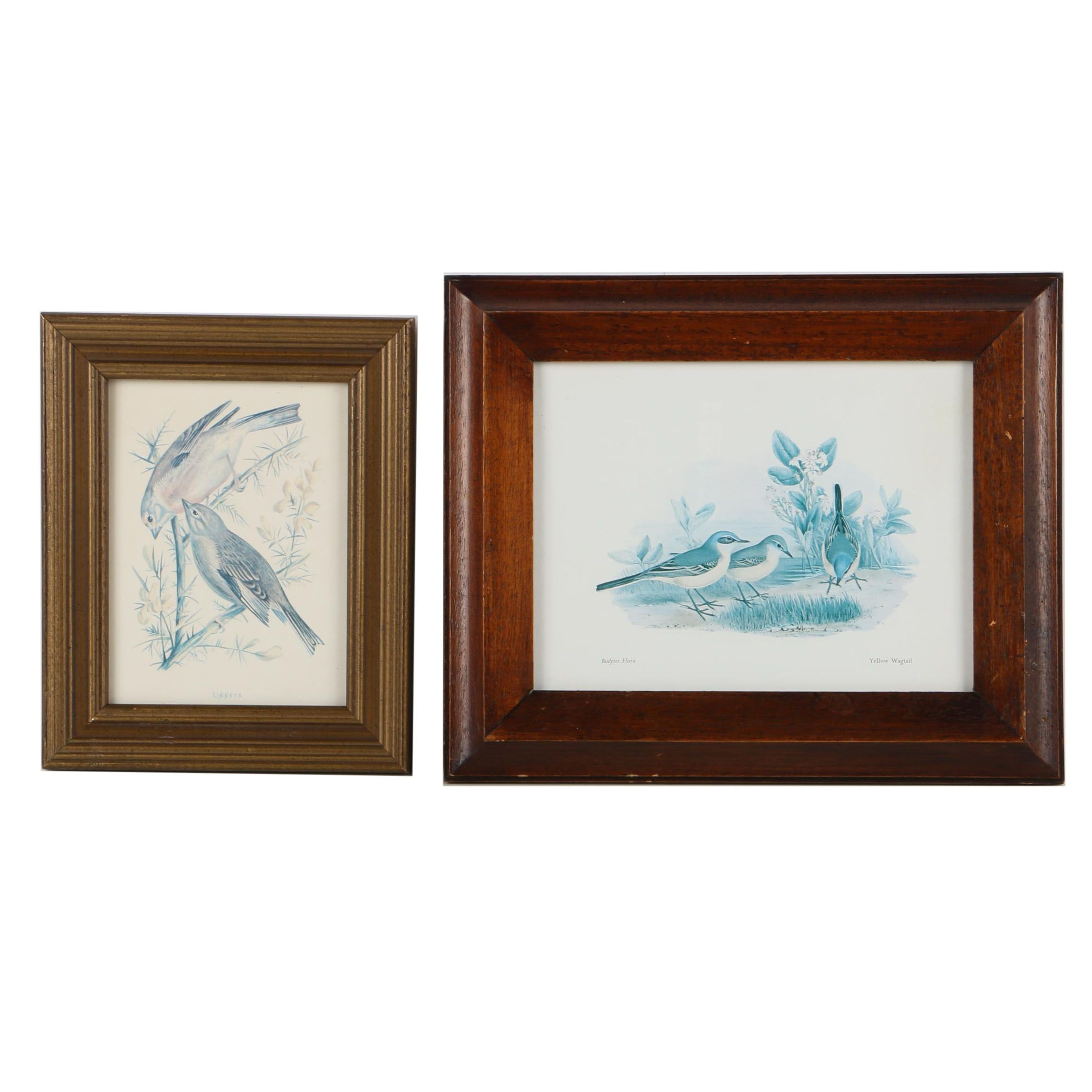 Pair of Offset Lithograph Prints After Bird Illustrations