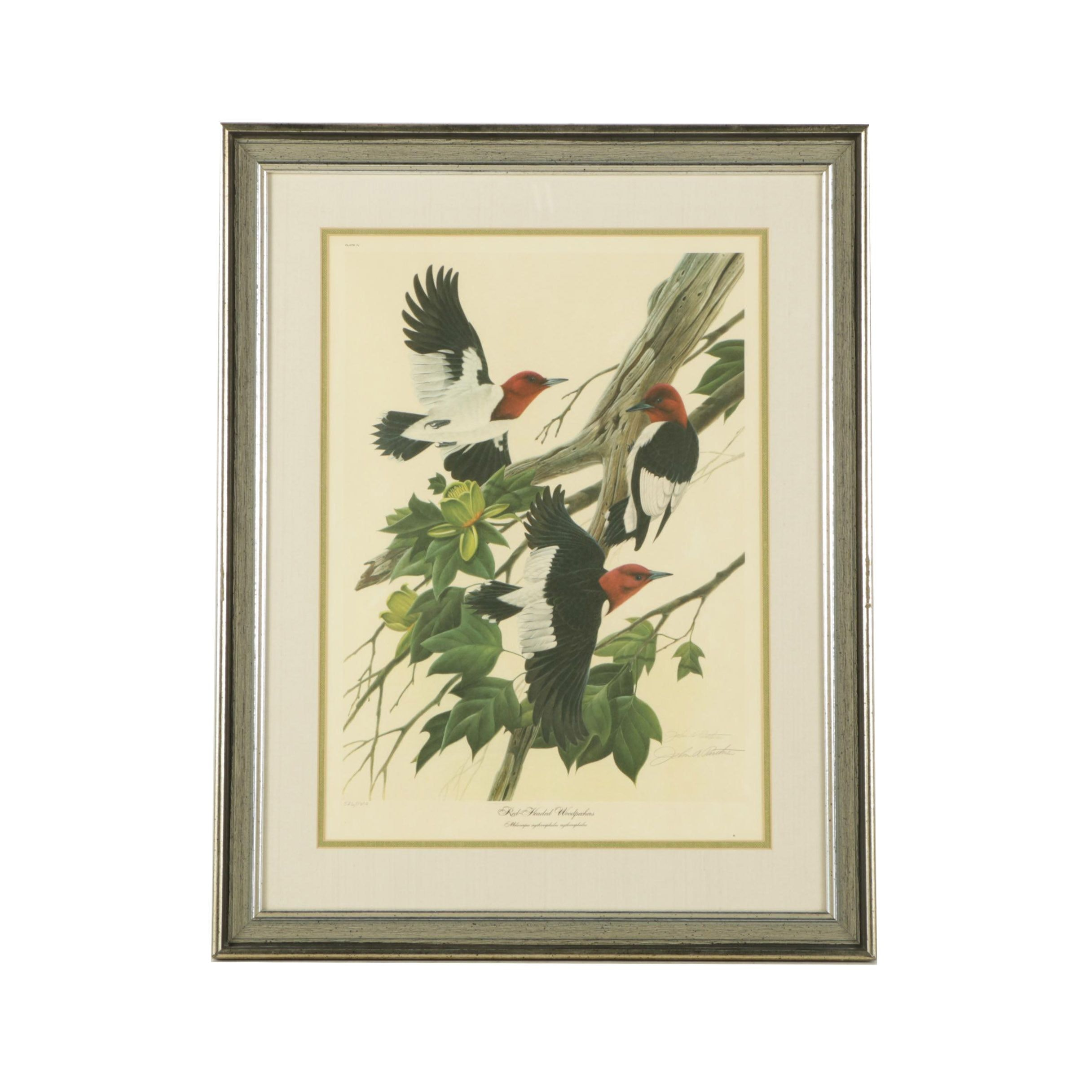 """John A. Ruthven Limited Edition Offset Lithograph """"Red-Headed Woodpeckers"""""""