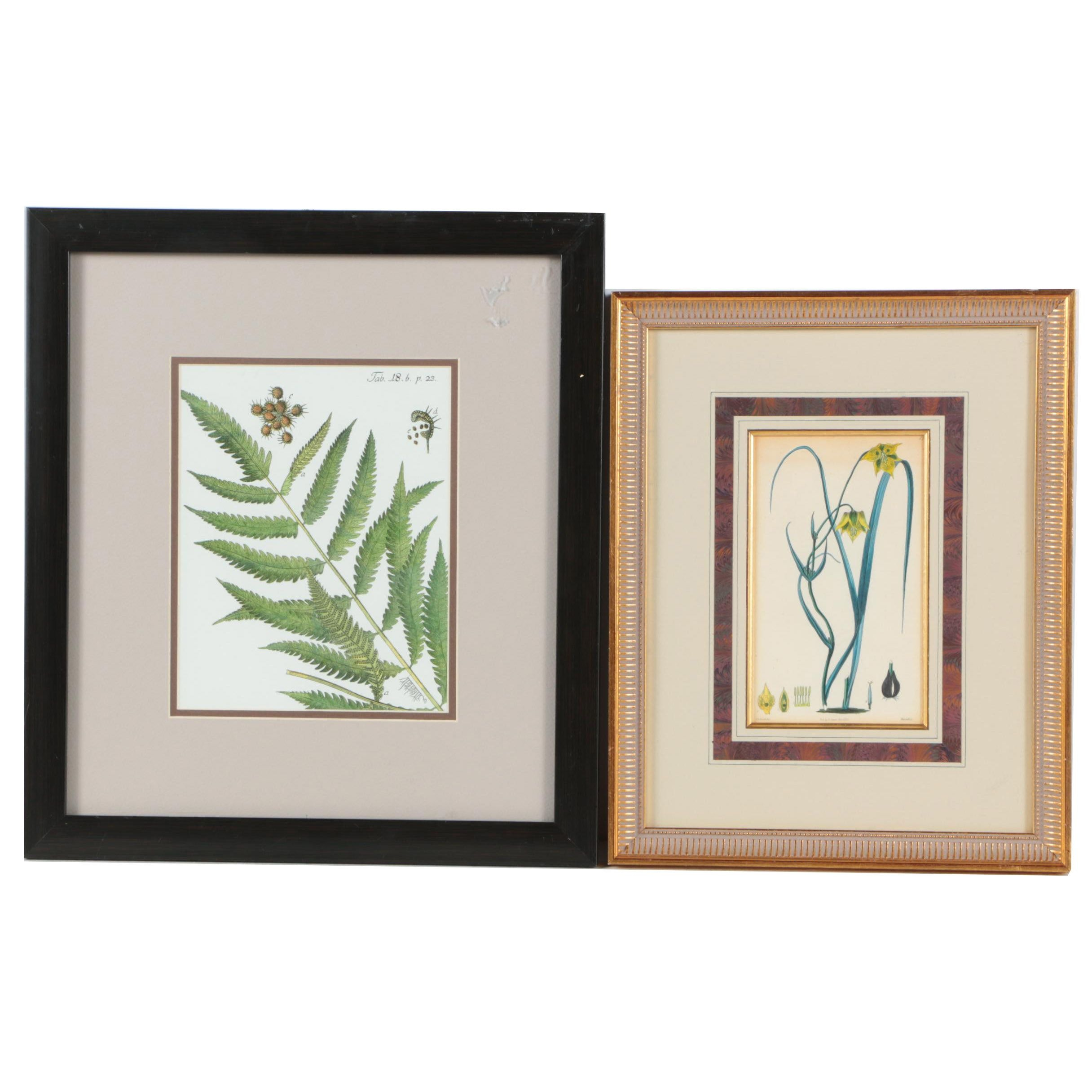 Botanical Illustrations Featuring Hand Colored Etching and Offset Lithograph