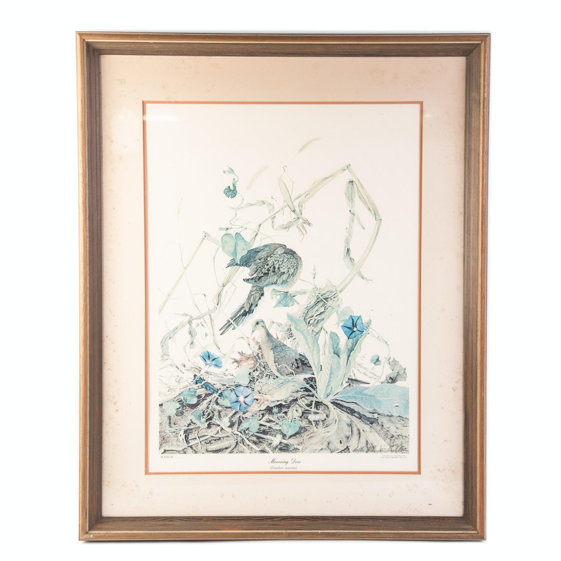 "Offset Lithograph After Sallie Ellington Middleton's ""Mourning Dove"""