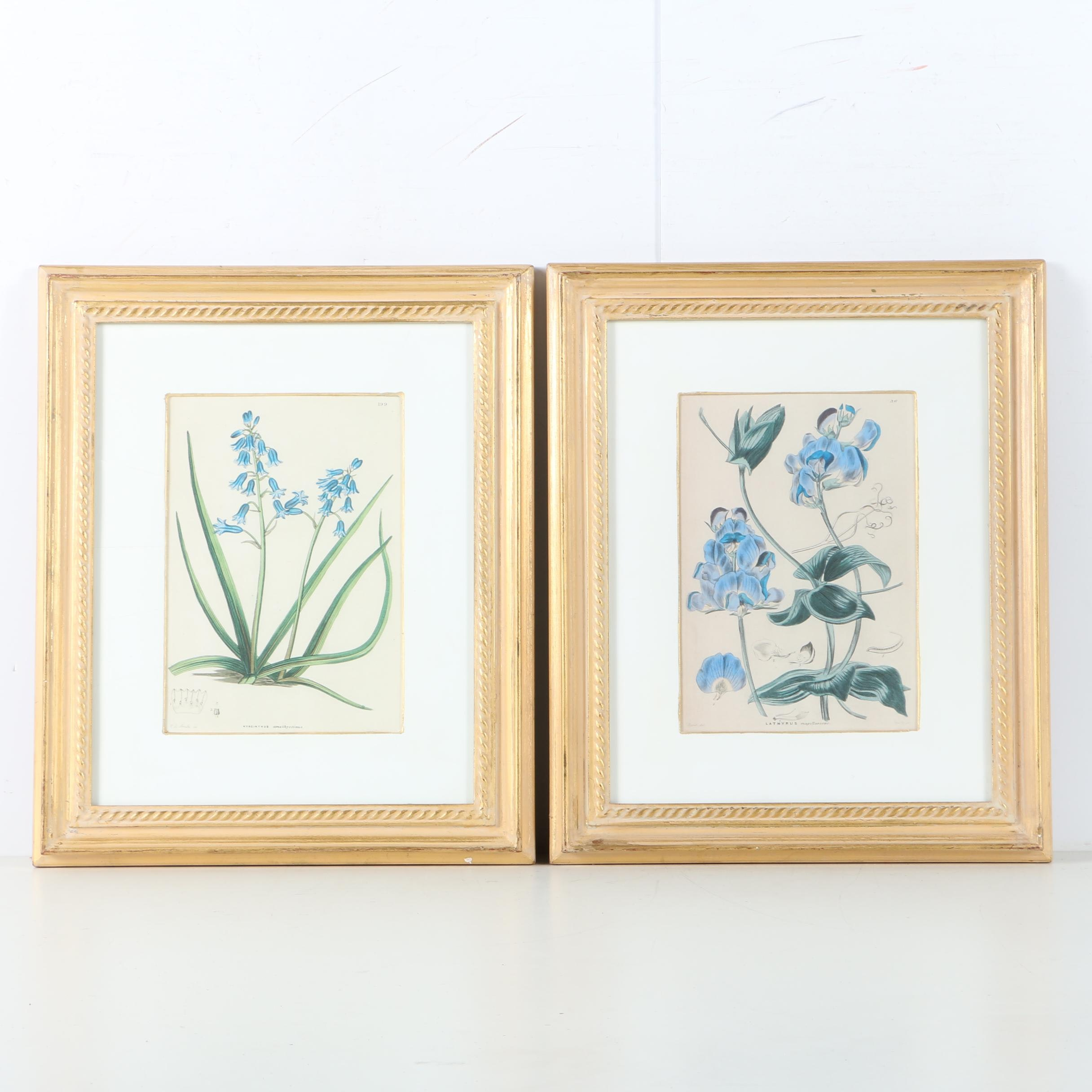 Giclee Prints on Paper After Botanical Illustrations