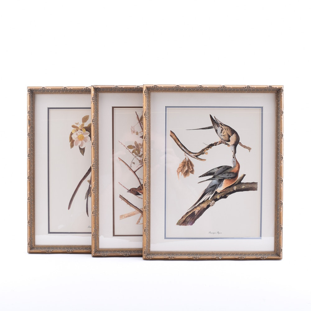 Offset Lithographs After John James Audubon Bird Illustrations