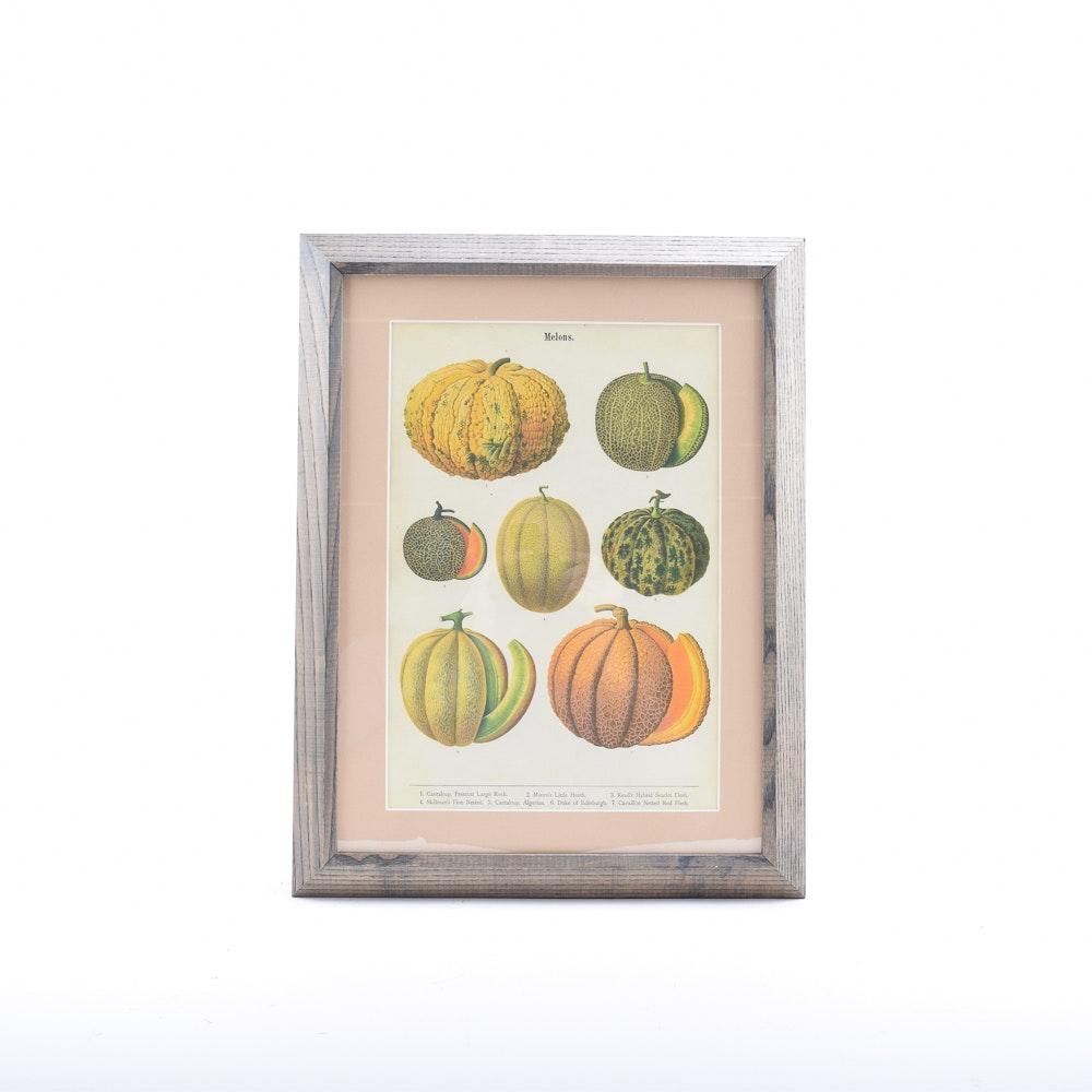 "Print After Ernst Benary's Chromolithograph ""Melons"""