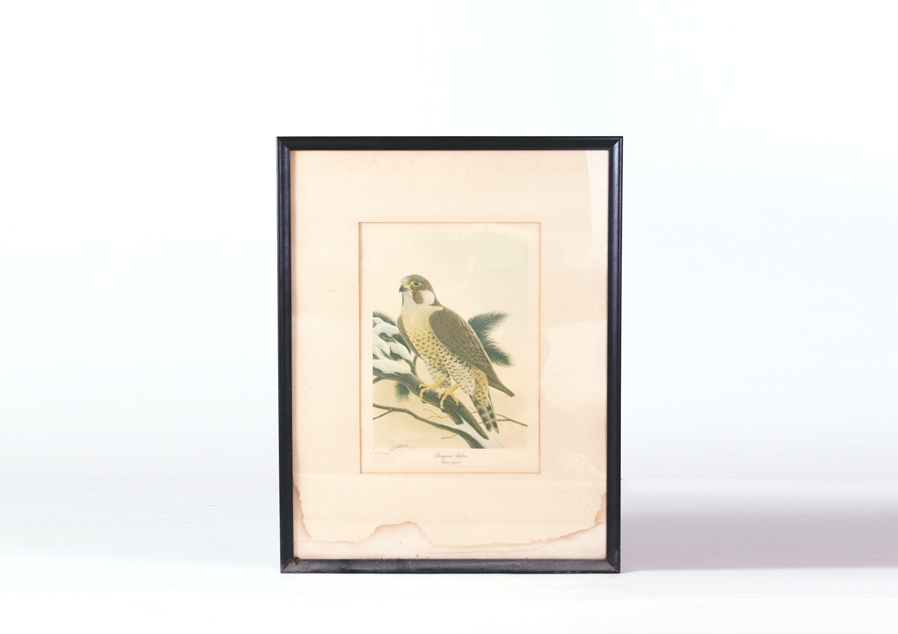 "Vintage Signed John Ruthven Limited Edition Offset Lithograph ""Peregrine Falcon"""
