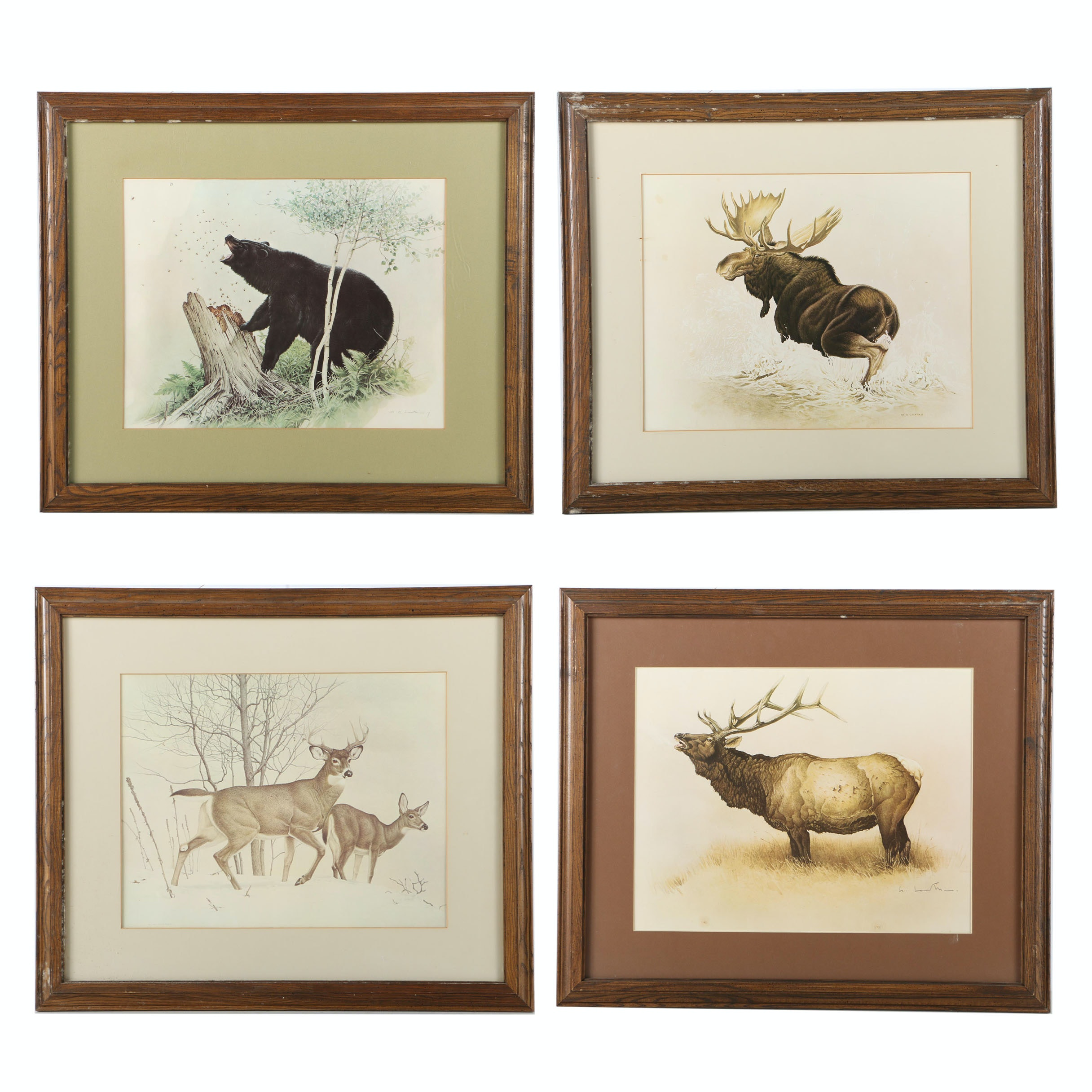 Wildlife Reproduction Prints on Paper After Glen Loates