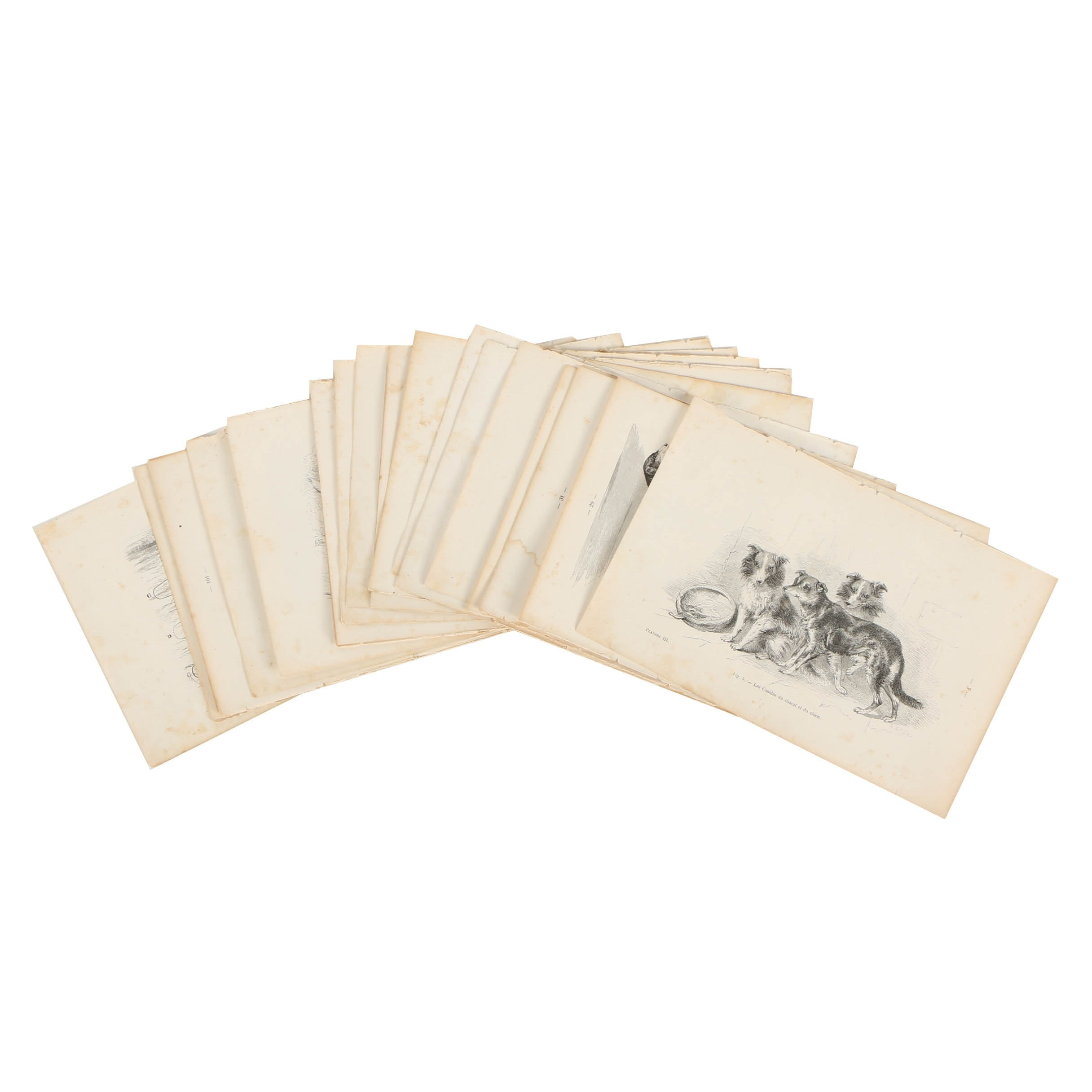 Lithograph Prints on Paper of Dogs