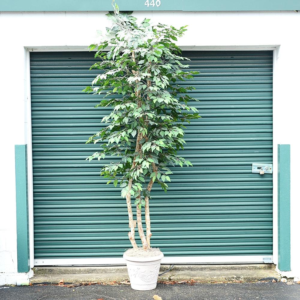 Faux Ficus Plant and Planter