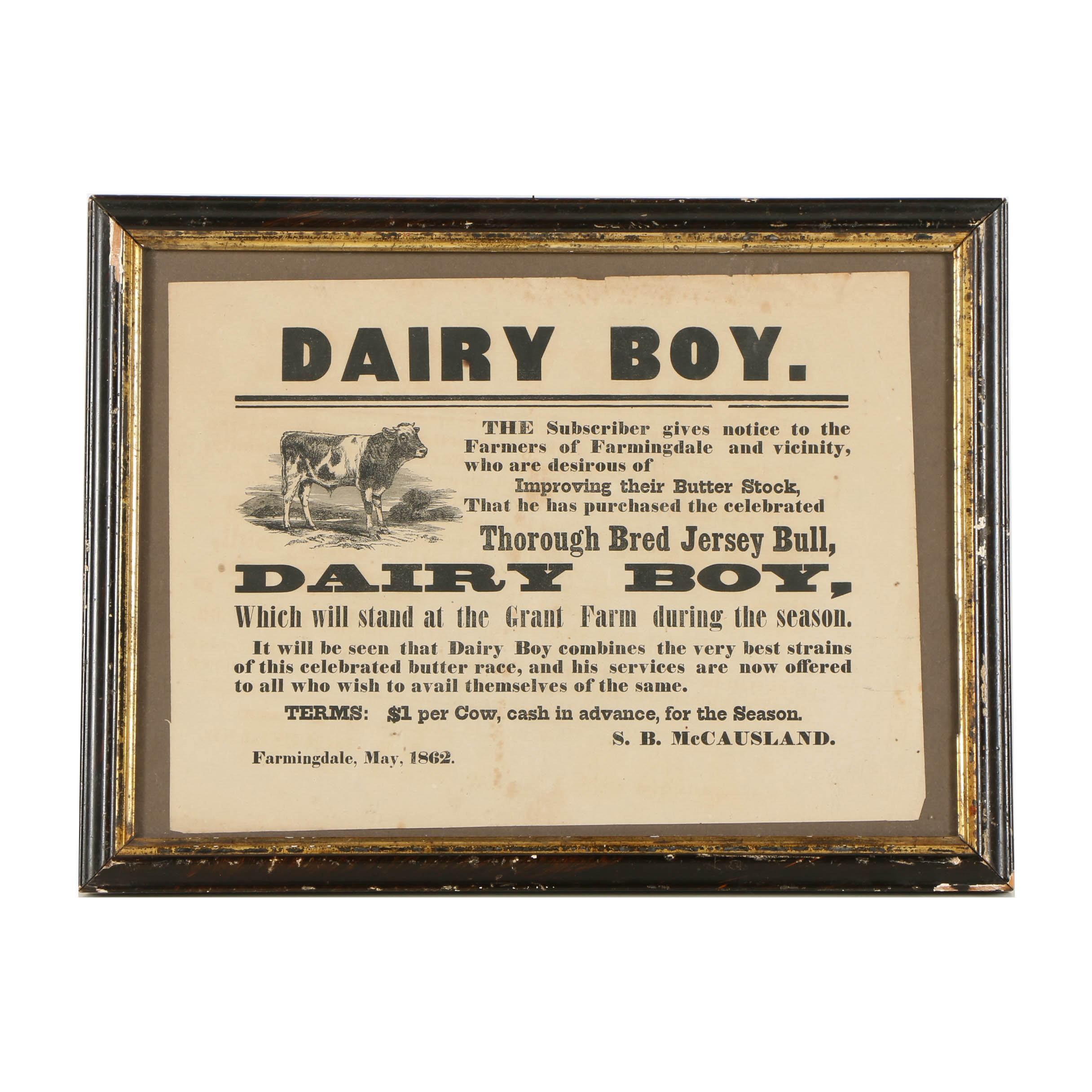 Lithograph Print on Paper of a Dairy Boy Cow Advertisement