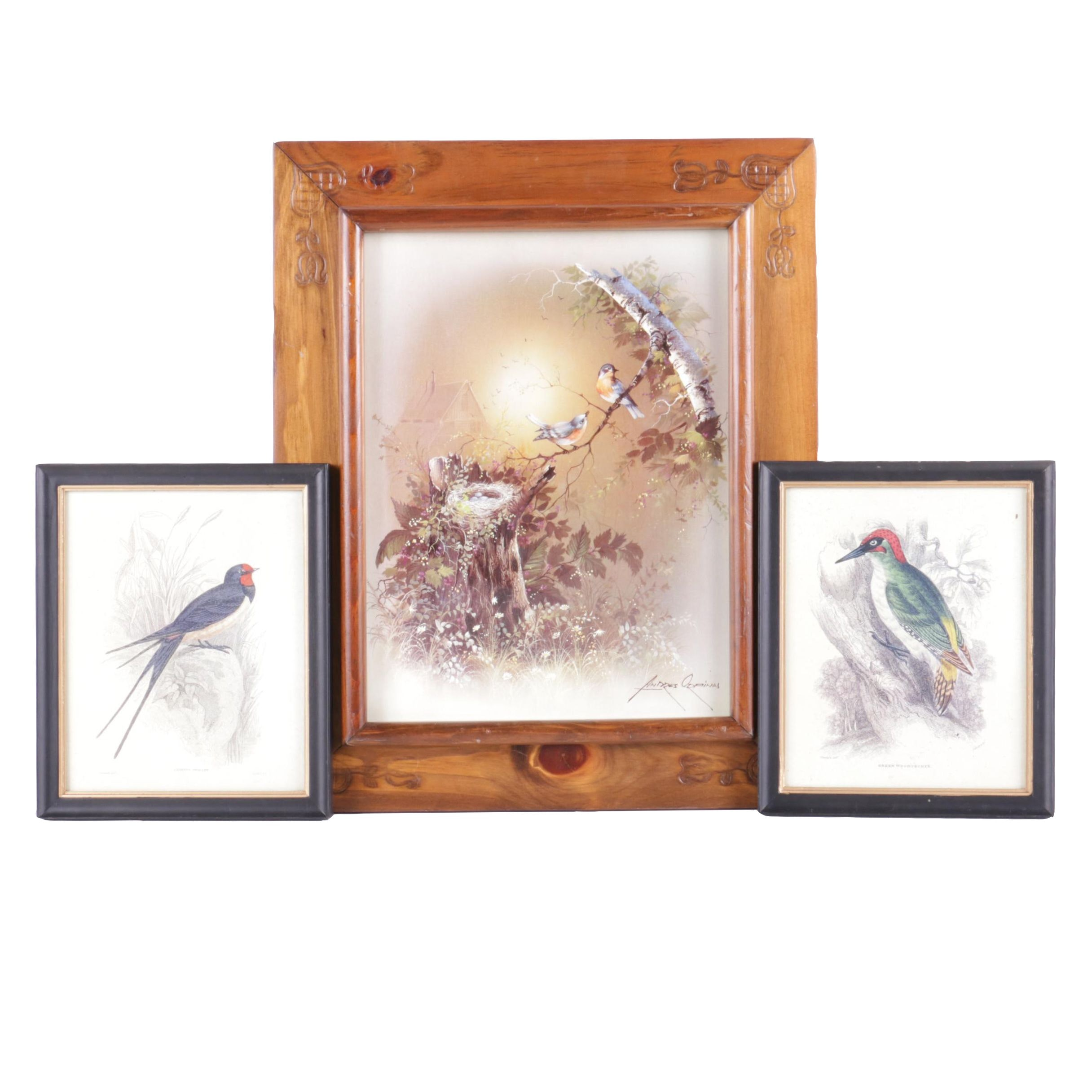Offset Lithographs of Birds After Andres Orpinas and Sir William Jardine