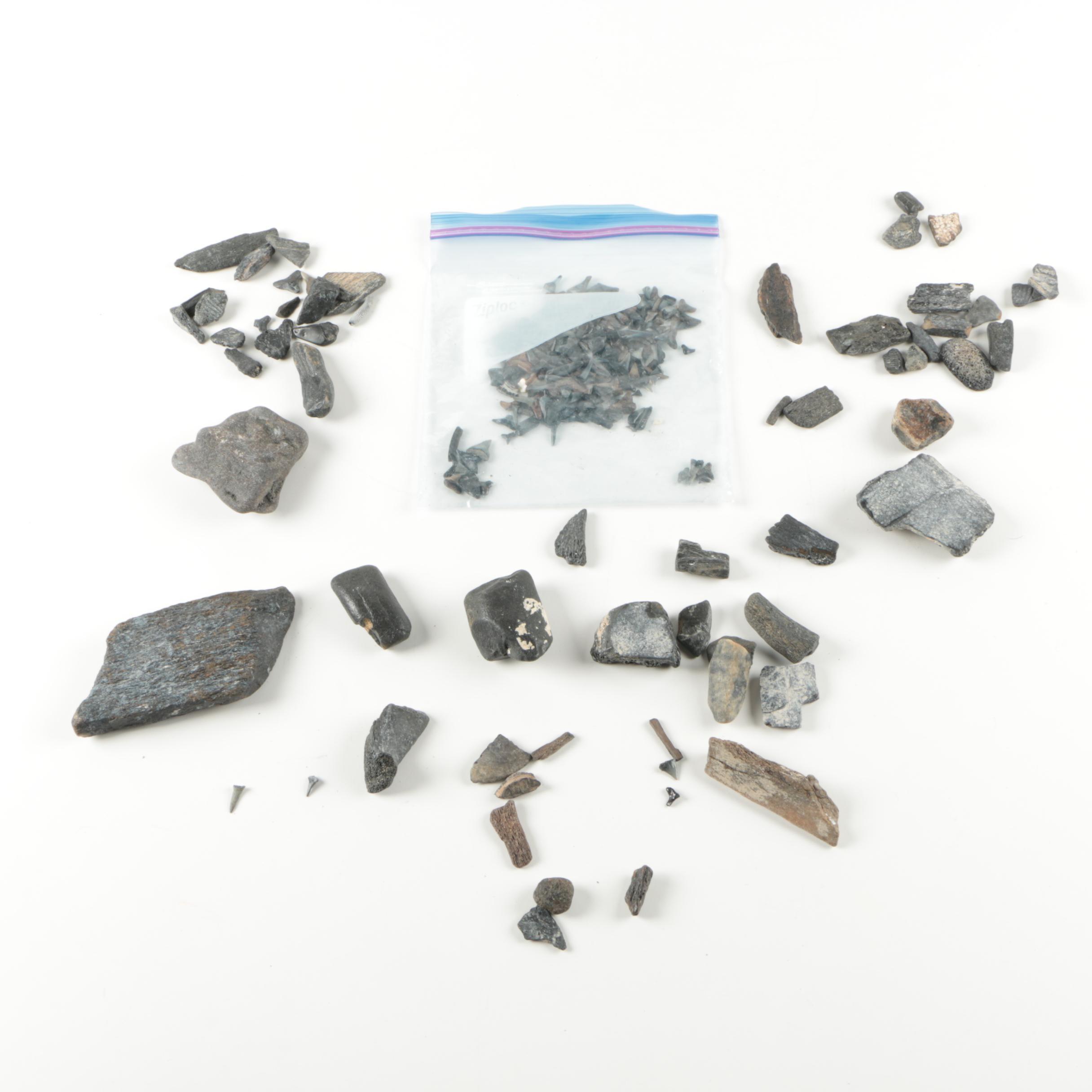 Recent Vertebrate Fossil Specimens