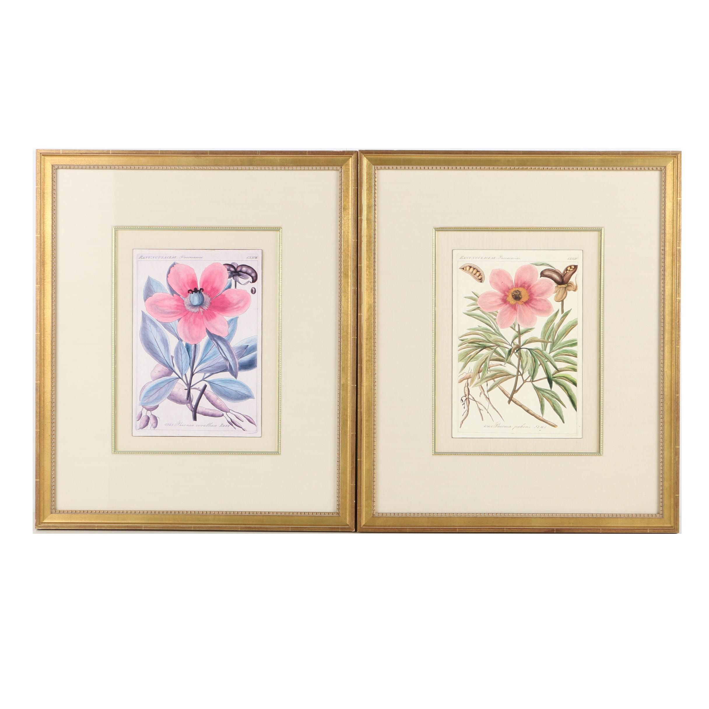 Offset Lithographs on Paper of Peonies