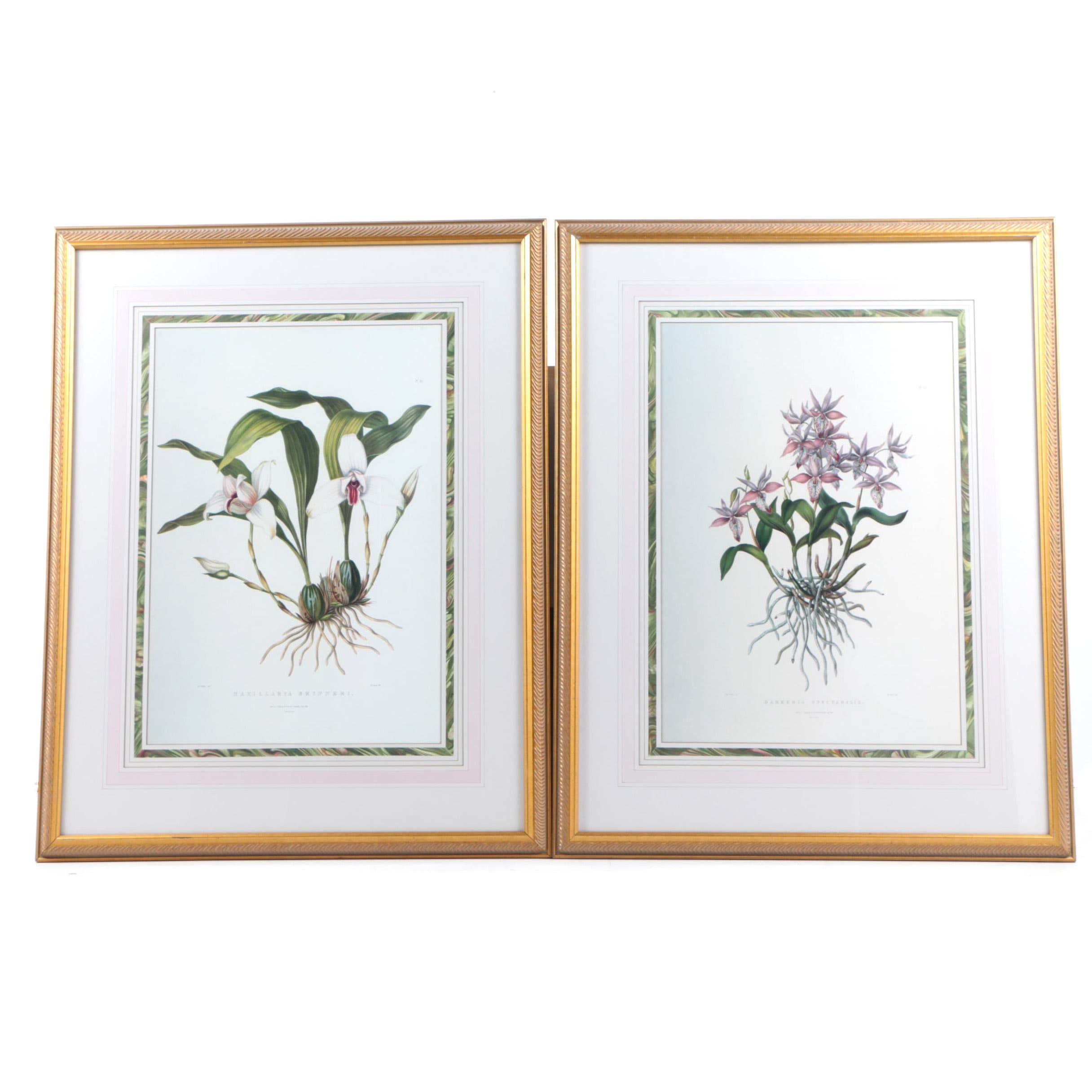 Offset Lithographs After Augusta Withers Botanical Prints of Orchids