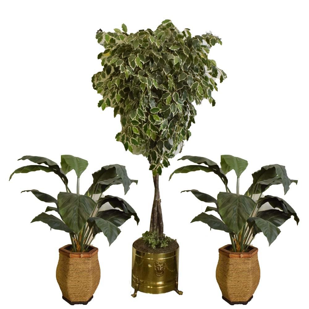 Faux Ficus Tree and Faux Elephant Ear Decorative Plants