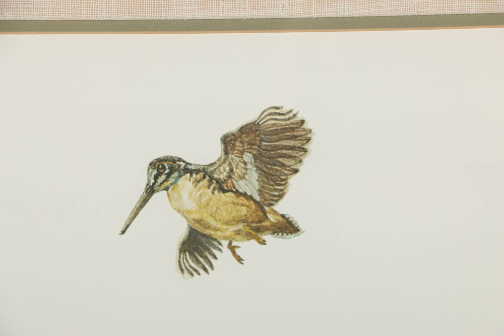 Offset Lithograph On Paper After Ernest Hart Quot Springer