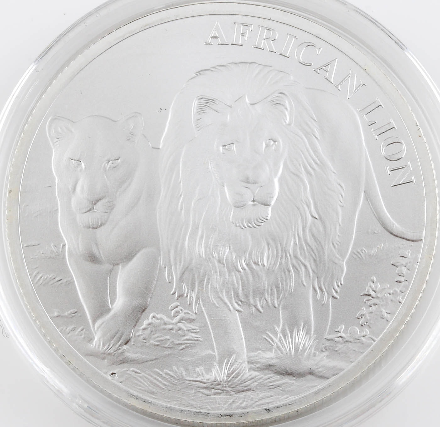 2016 African Lion Commemorative 5000 Franc Silver Coin from Republic of Congo