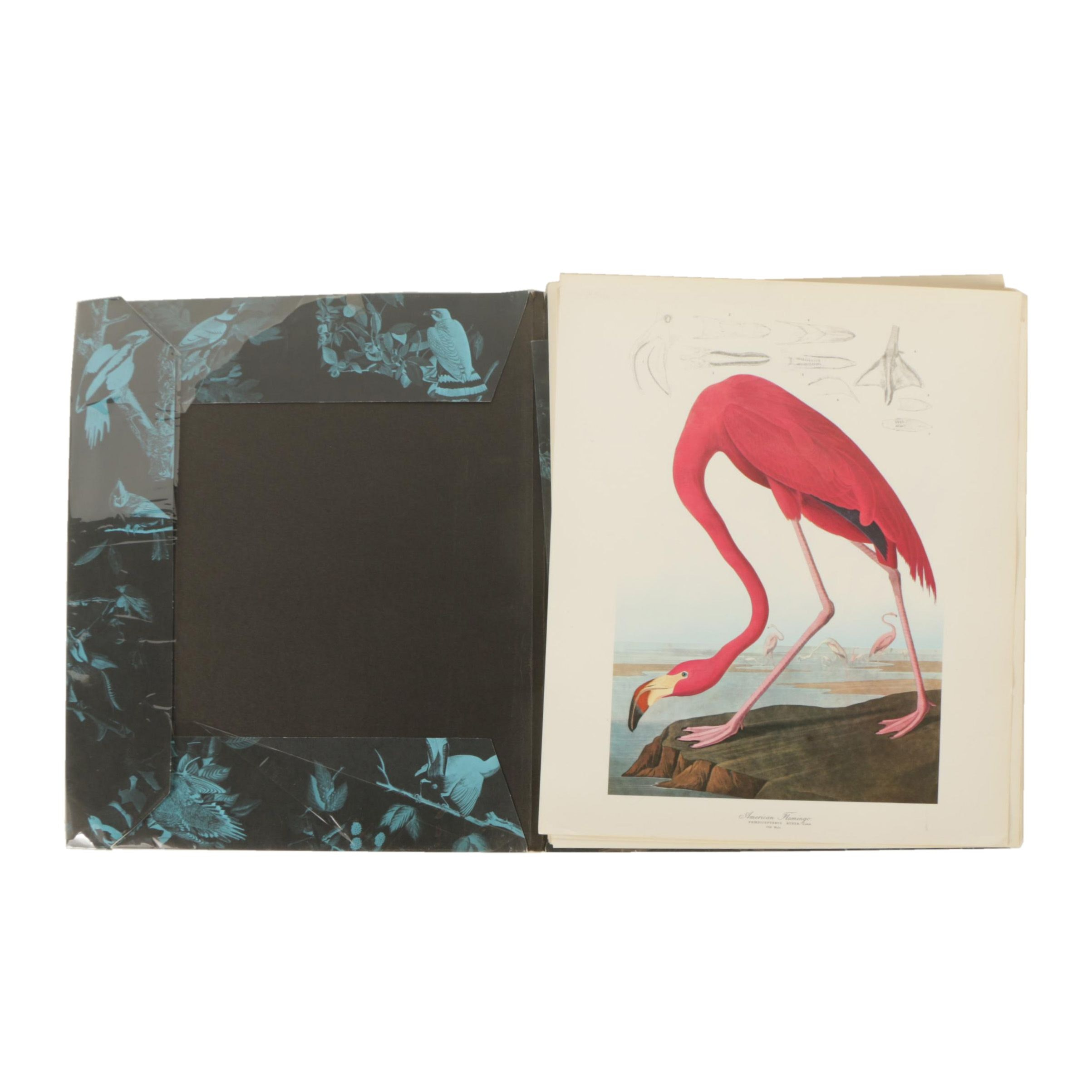 "Offset Lithograph Prints and Book ""The Audubon Folio 30 Great Bird Paintings"""