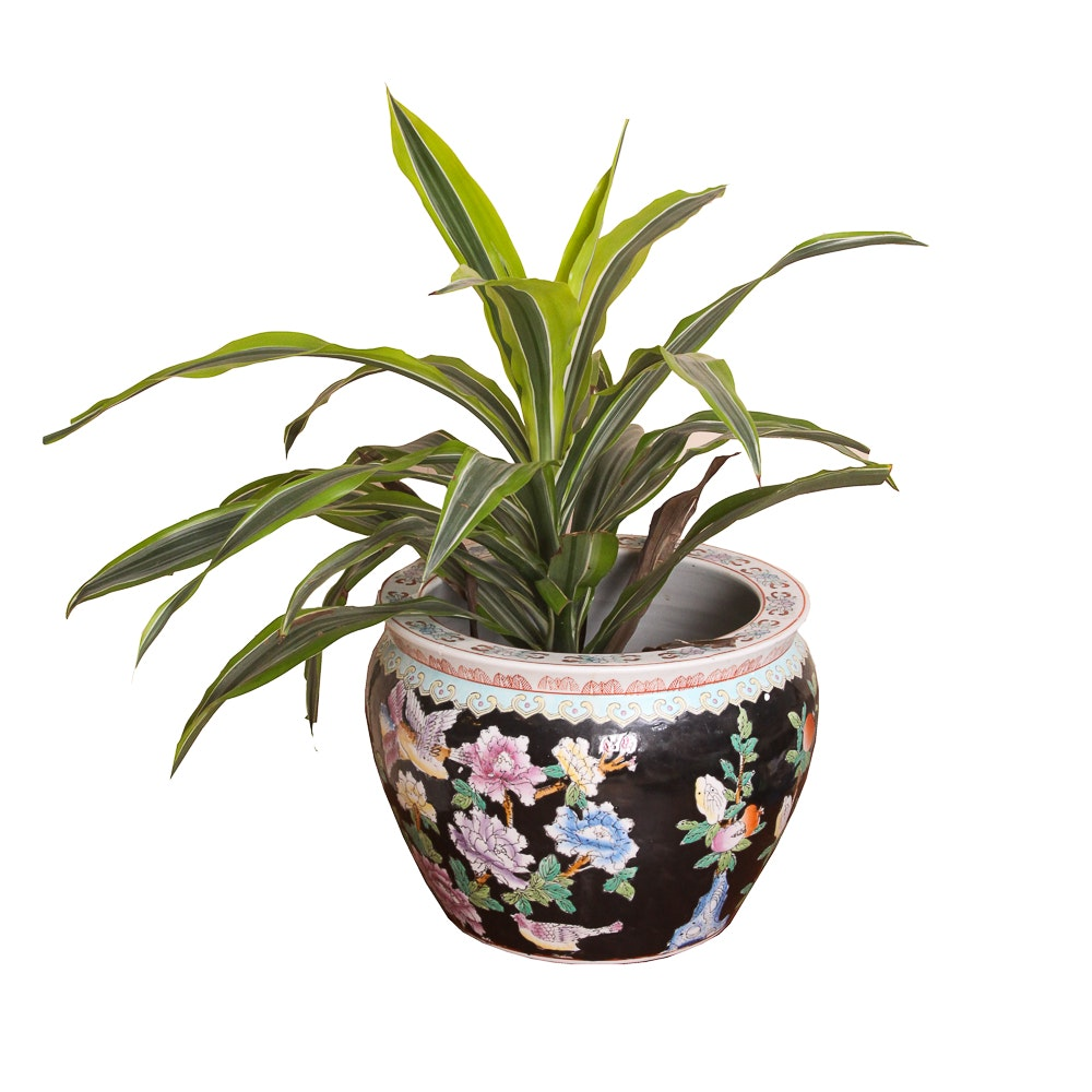 Plant With Chinese Ceramic Planter