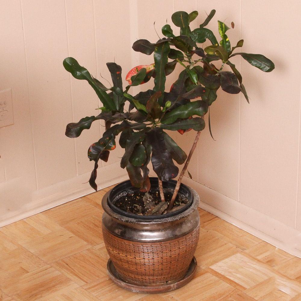 Ceramic Planter with a Living Plant