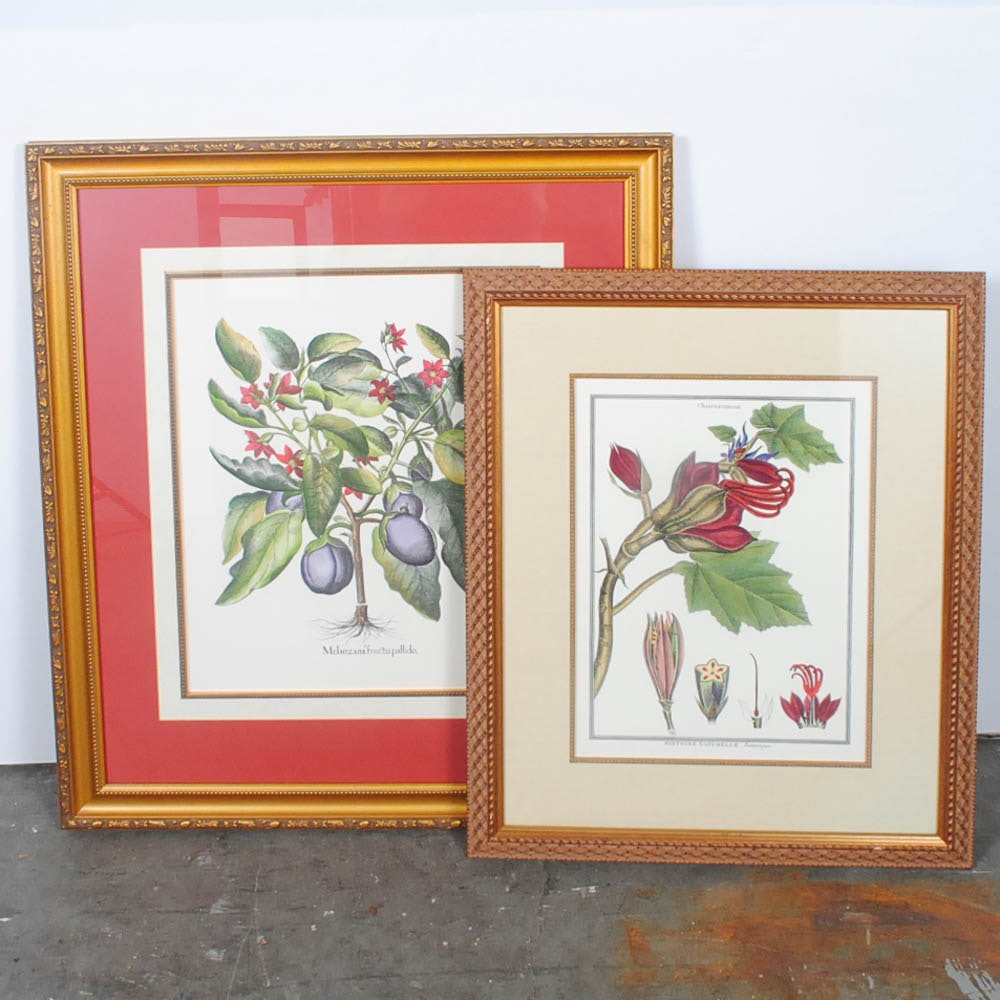 Two Botanical Offset Lithographs of Eggplant Bush and Mexican Hand Tree