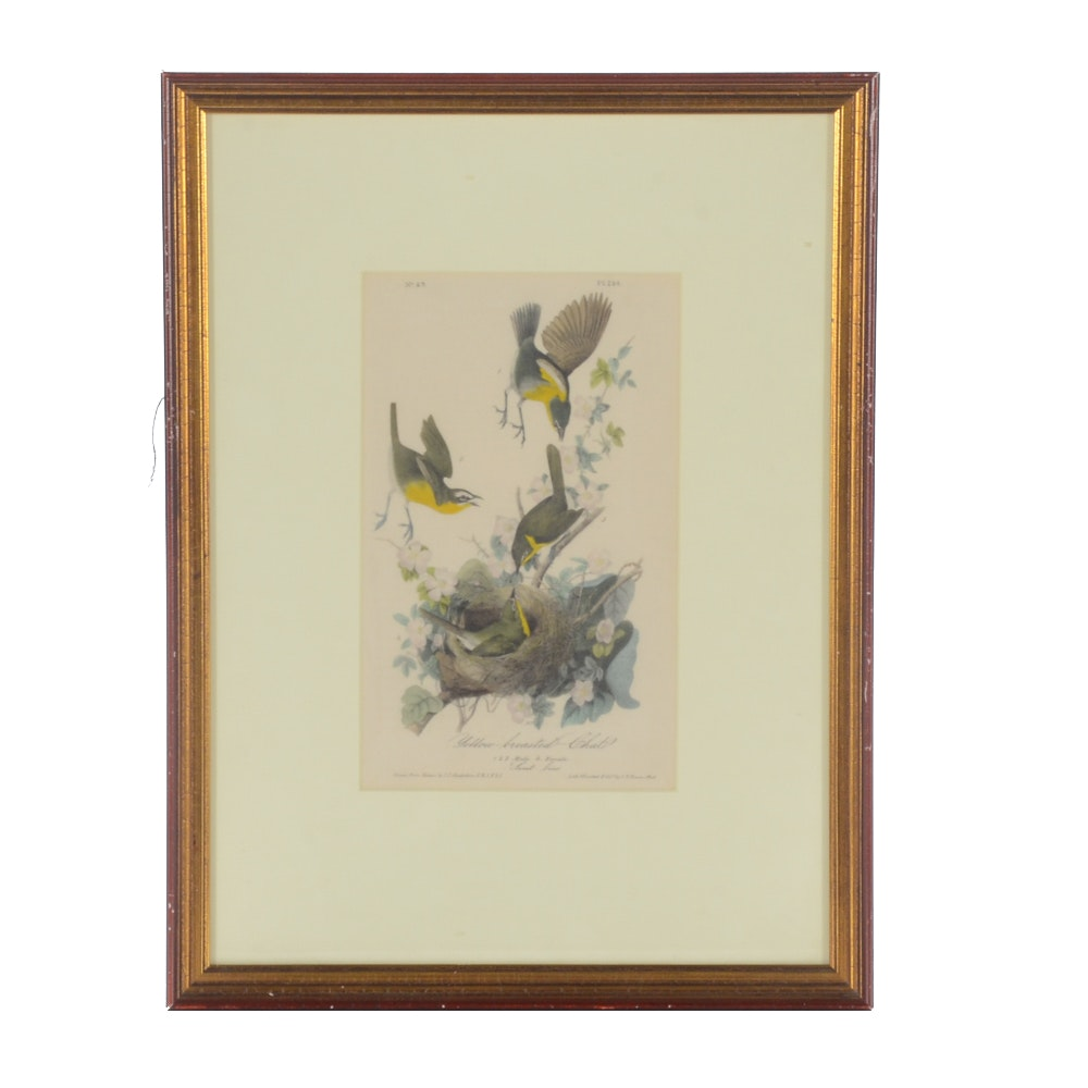 """Antique Hand-colored Lithograph after John J. Audubon """"Yellow-breasted Chat"""""""