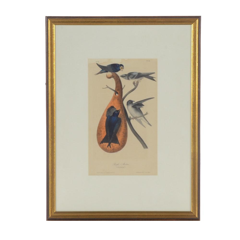 "First Edition Hand-colored Lithograph after John Audubon ""Purple Martin"""