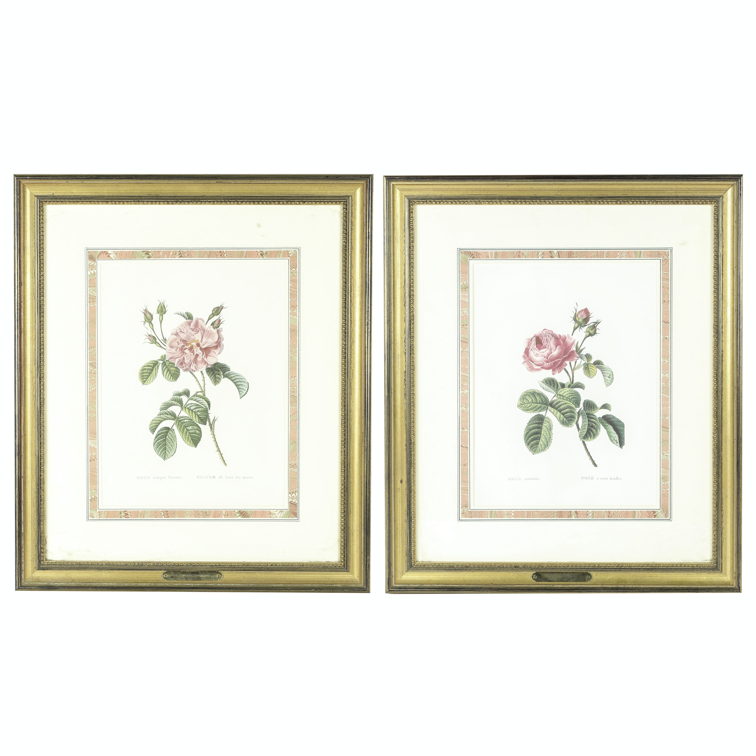 Botanical Reproduction Offset Lithographs After Pierre-Joseph Redoute