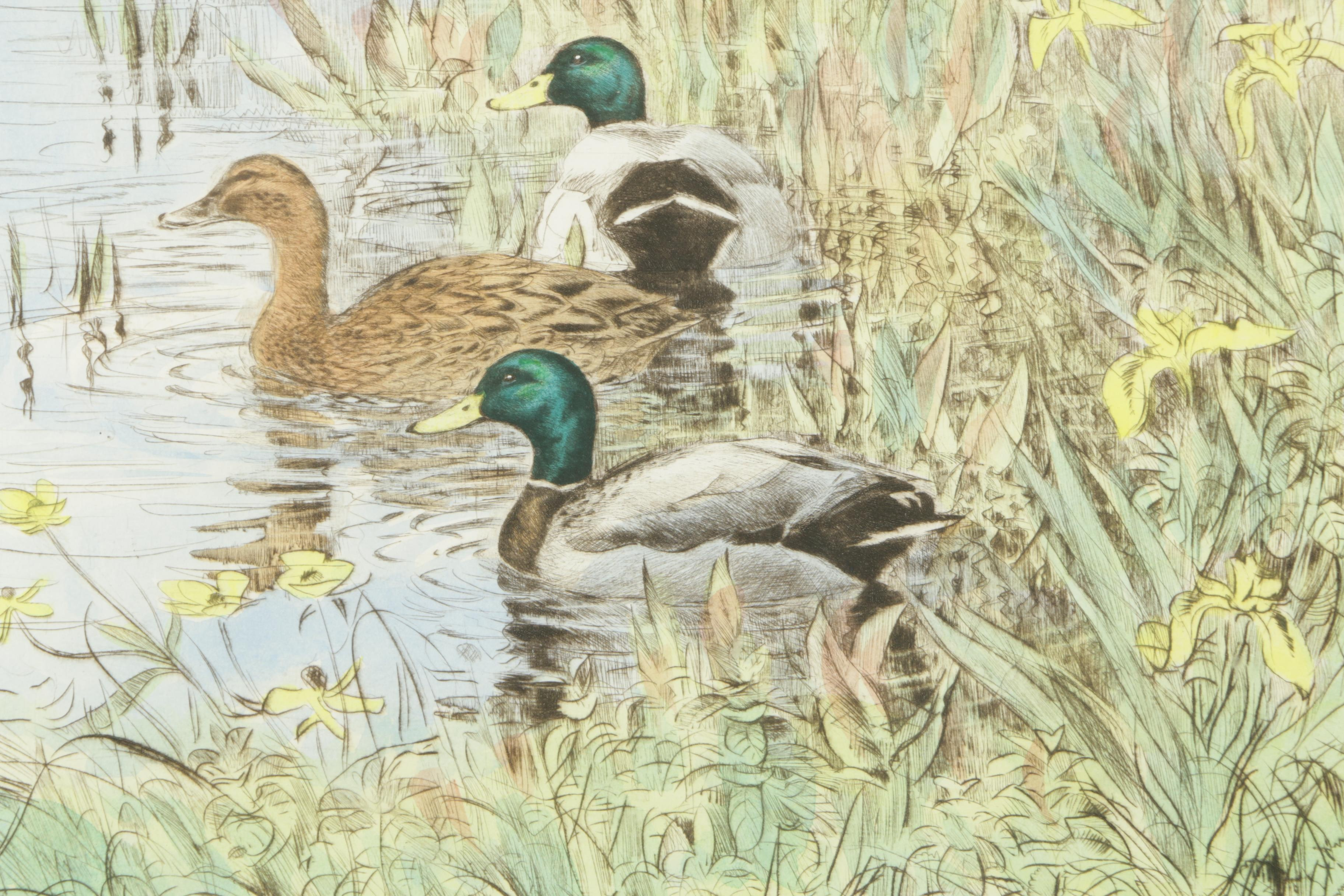 Hand Colored Drypoint Etching On Paper Quot Mallards On The
