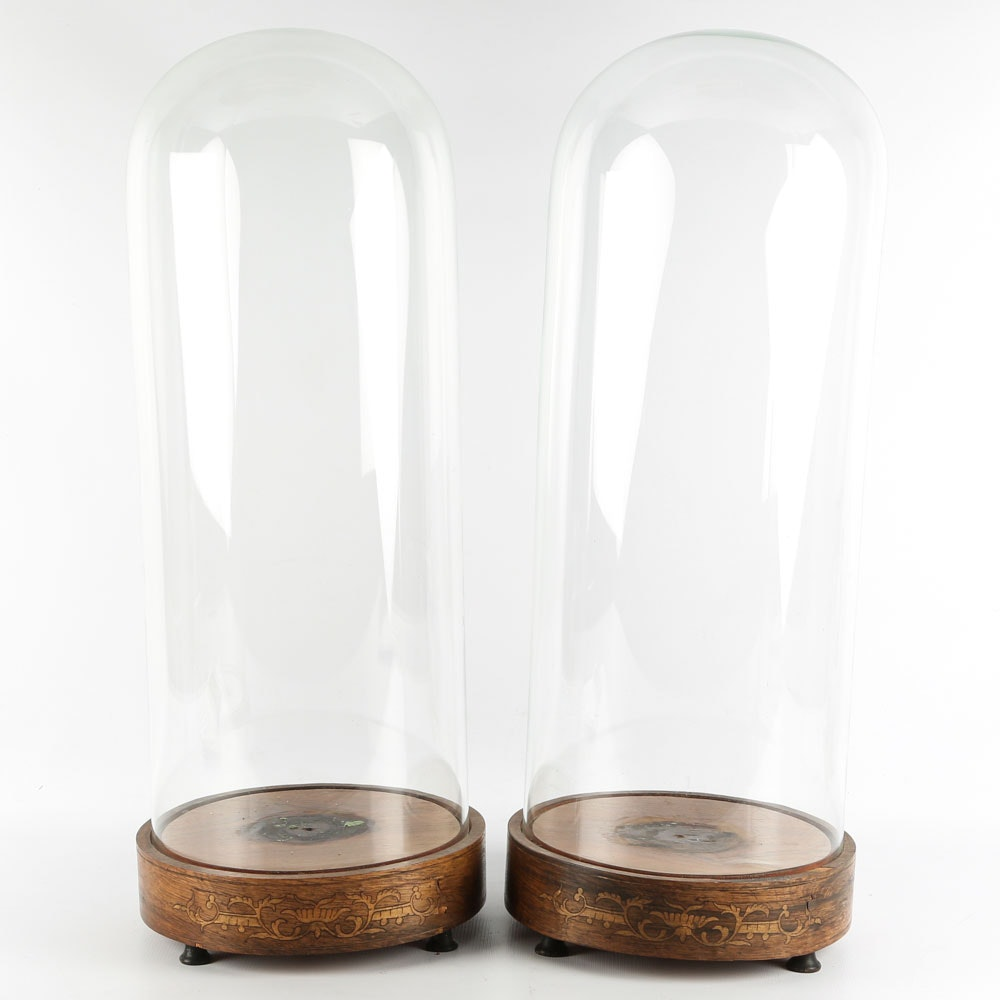 Glass Cloches with Inlaid Wood Bases