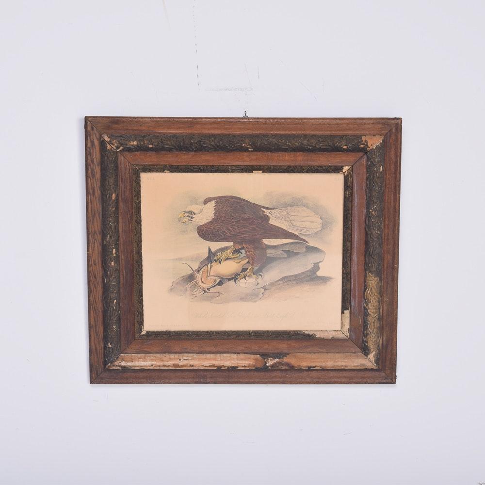 "Offset Lithograph After John James Audubon ""White-Headed Sea Eagle"""