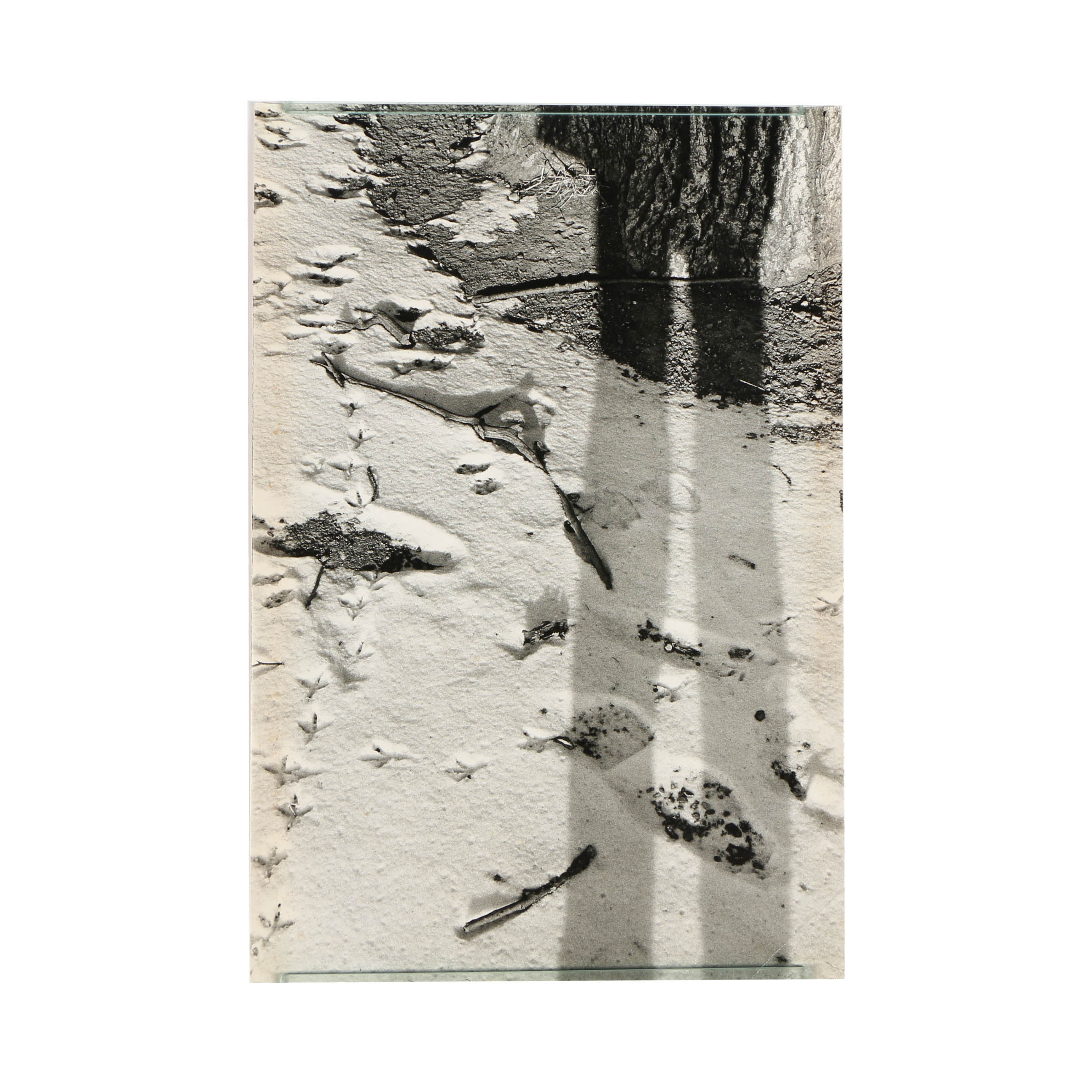 Don Werner Analog Photograph