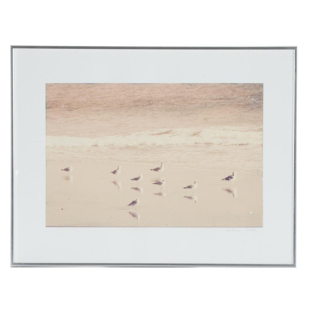 Arlene Alda Sepia Photograph of Seaguls on the Beach
