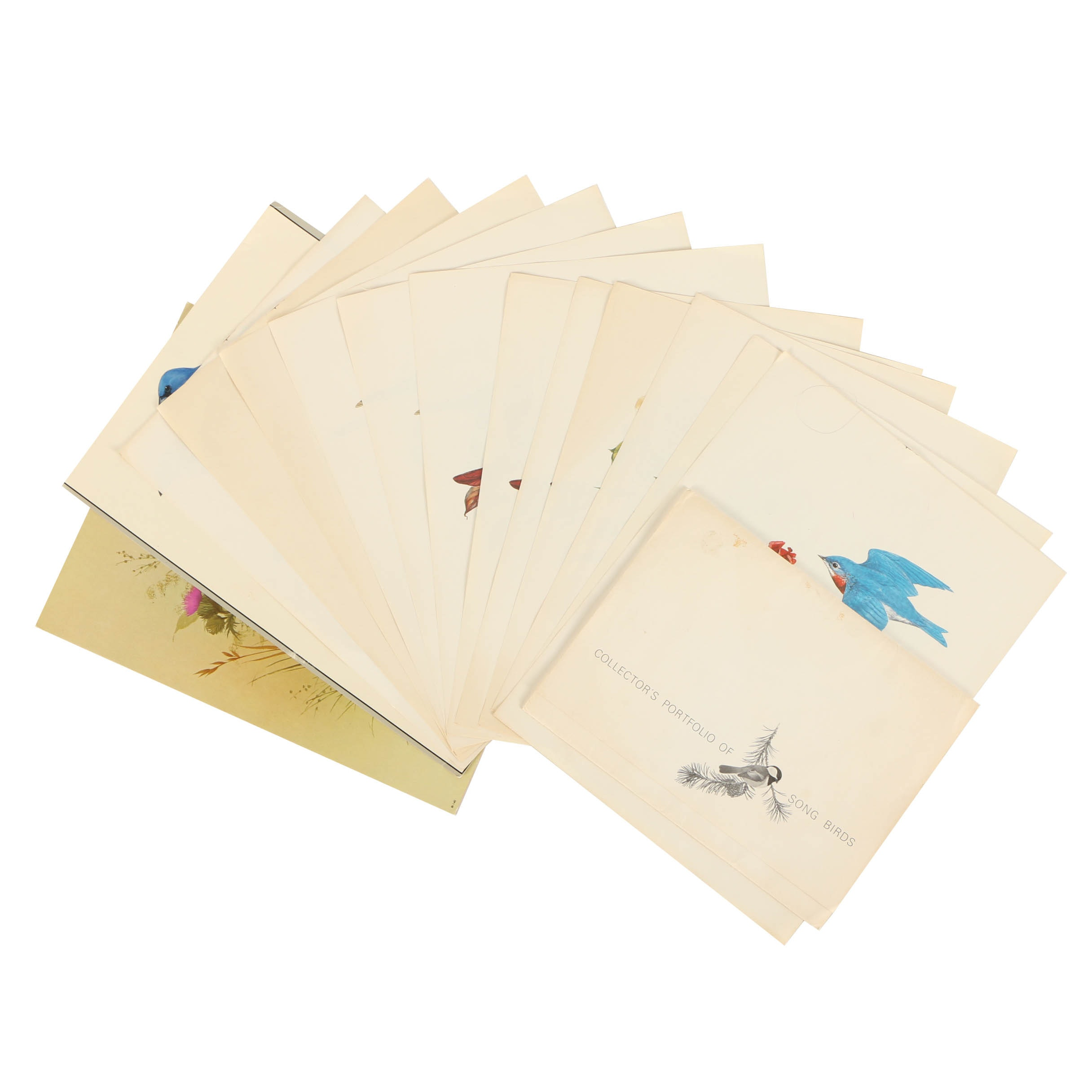 Offset Lithographs After Ornithological Illustrations