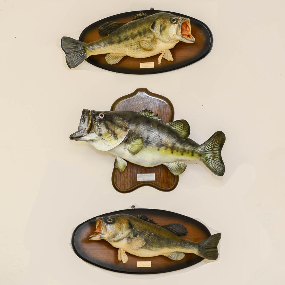 Taxidermy Bass Fish