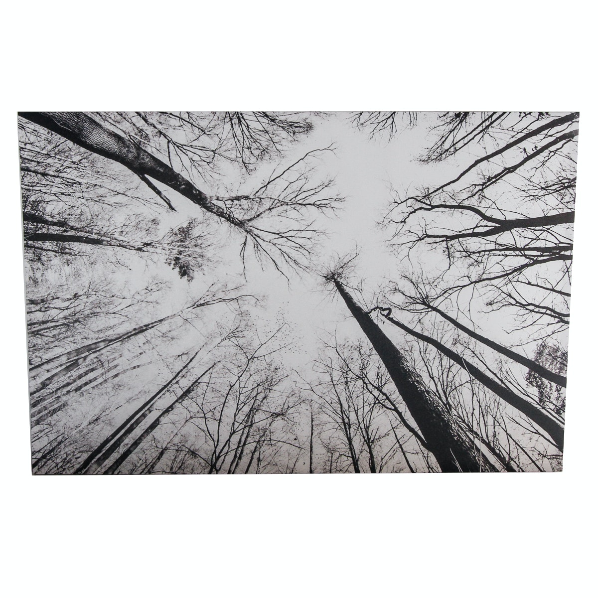 Offset Lithograph on Canvas After Robert Kohlhuber Photograph of Forest