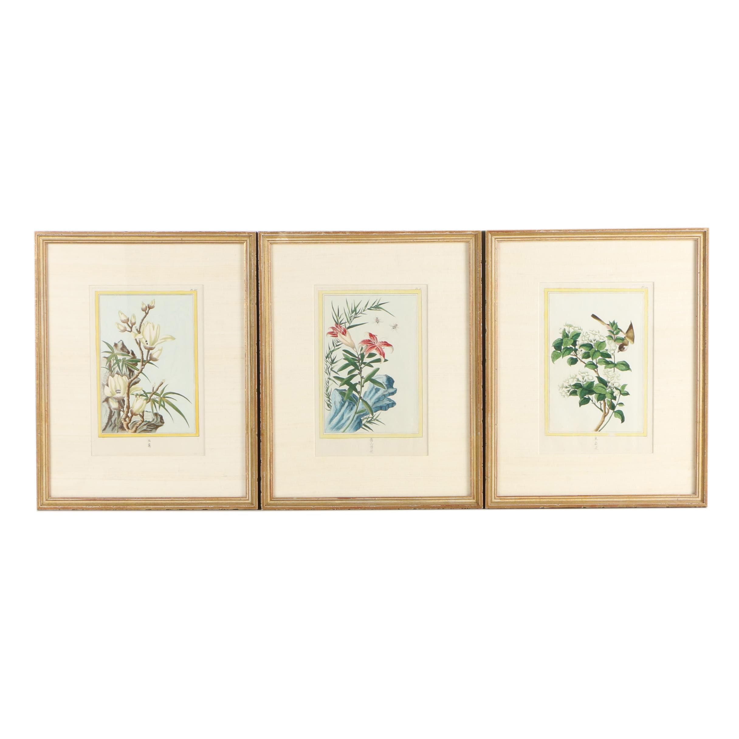 Hand-Colored Engravings of Botanical Studies