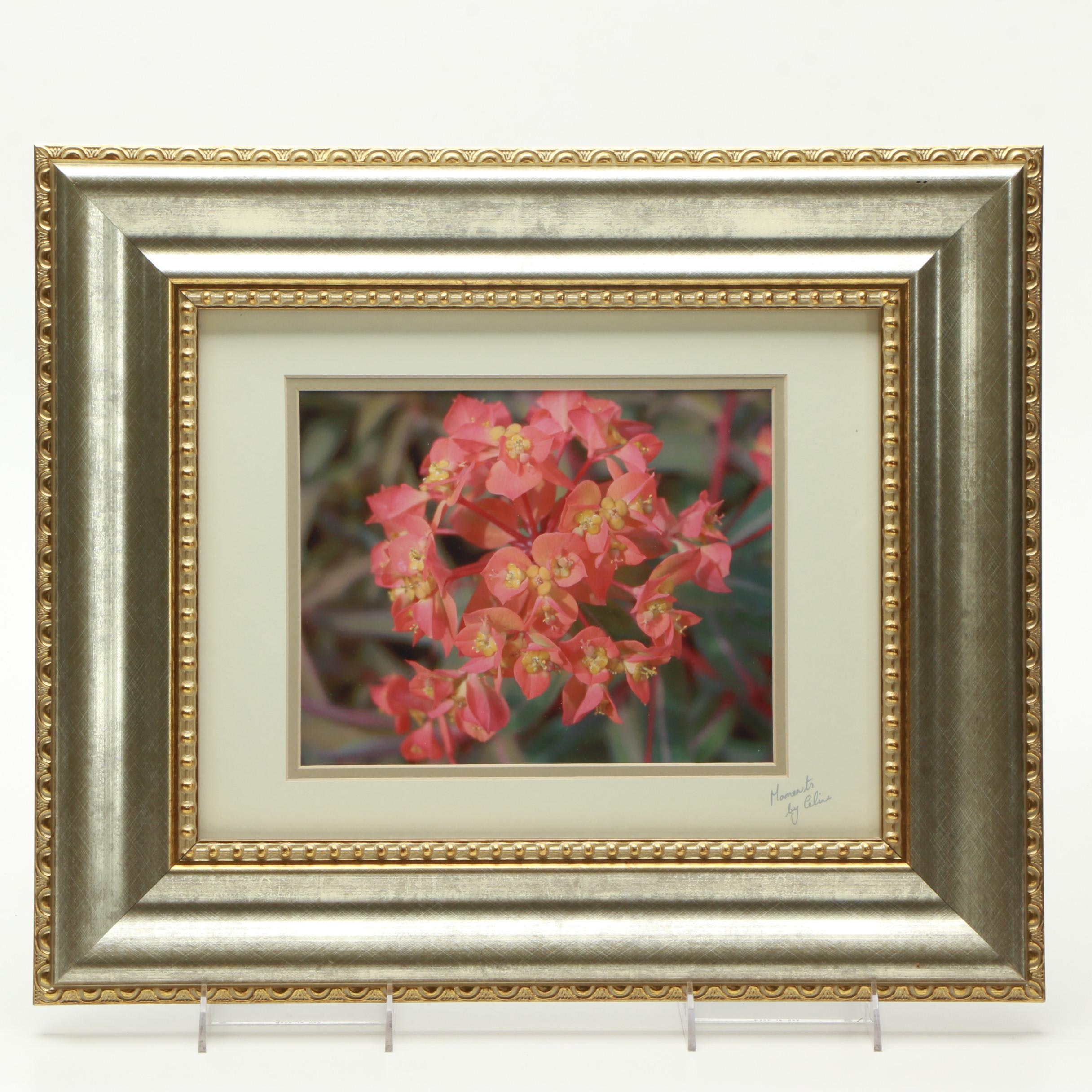 Giclee After a Photograph of a Flower
