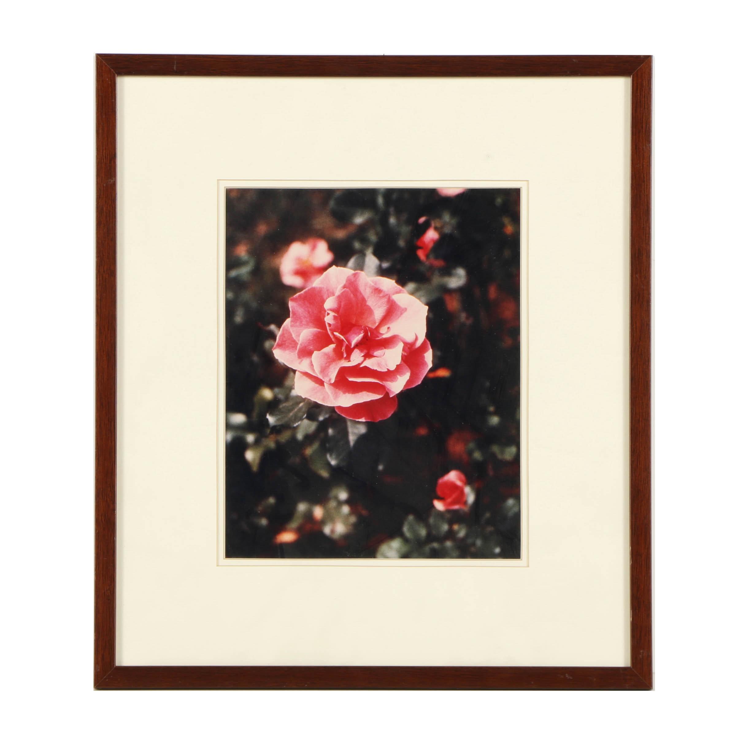 Louis Papp Color Photograph of a Rose