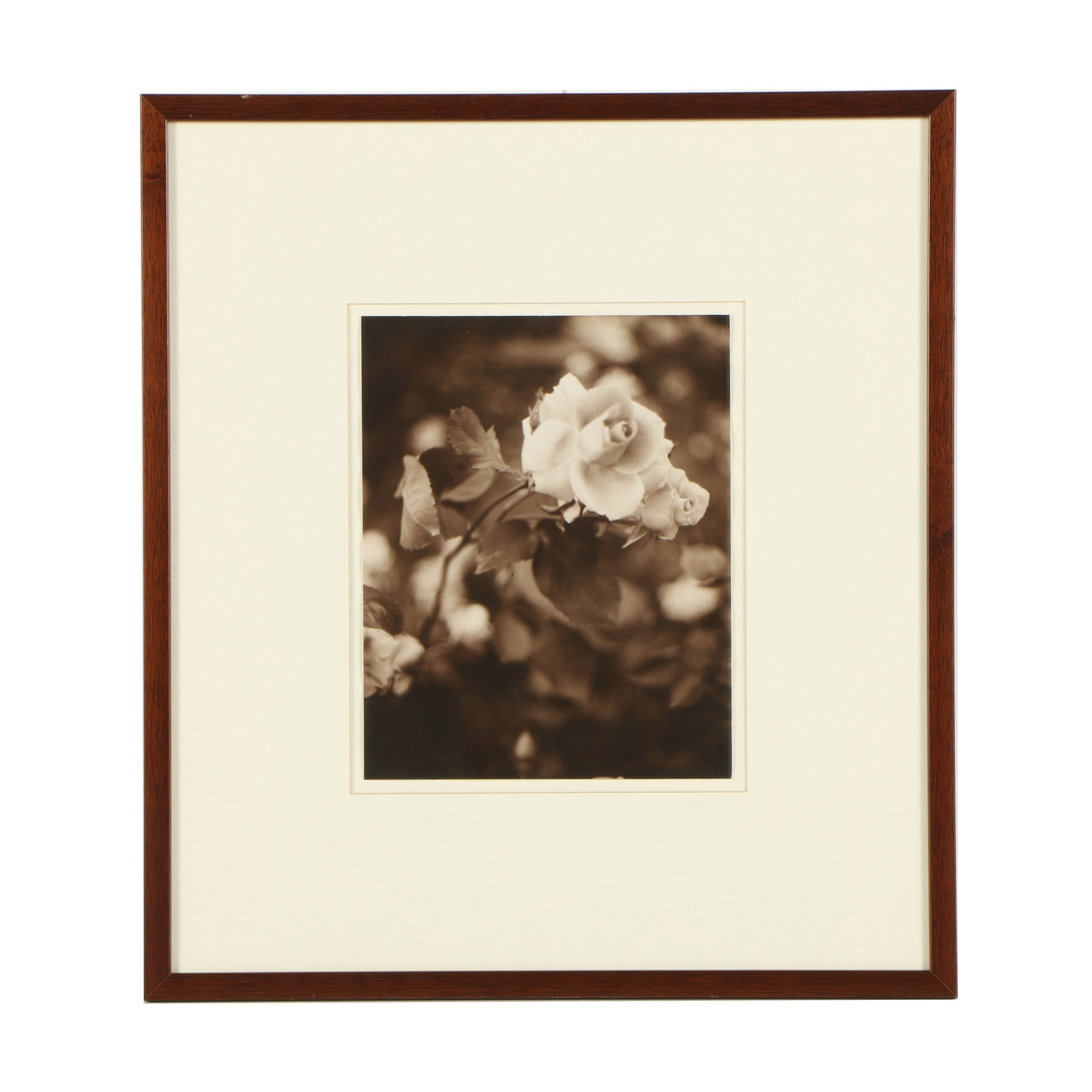 Louis Papp Sepia-Toned Analog Photograph of Roses