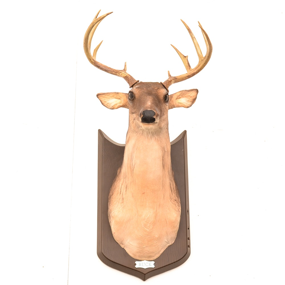 """Buck"" the Talking Deer"