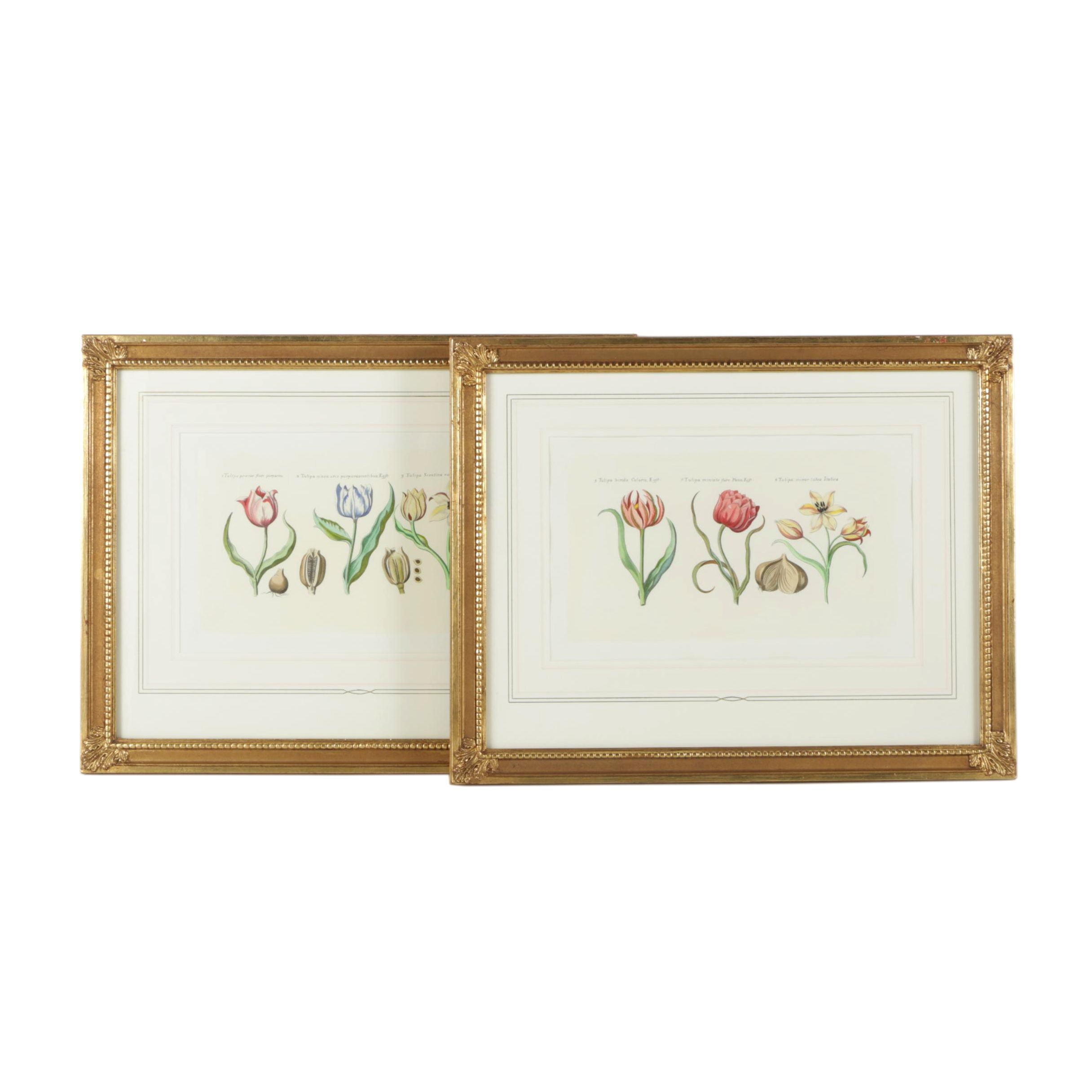 Hand Colored Halftone Prints of Tulips
